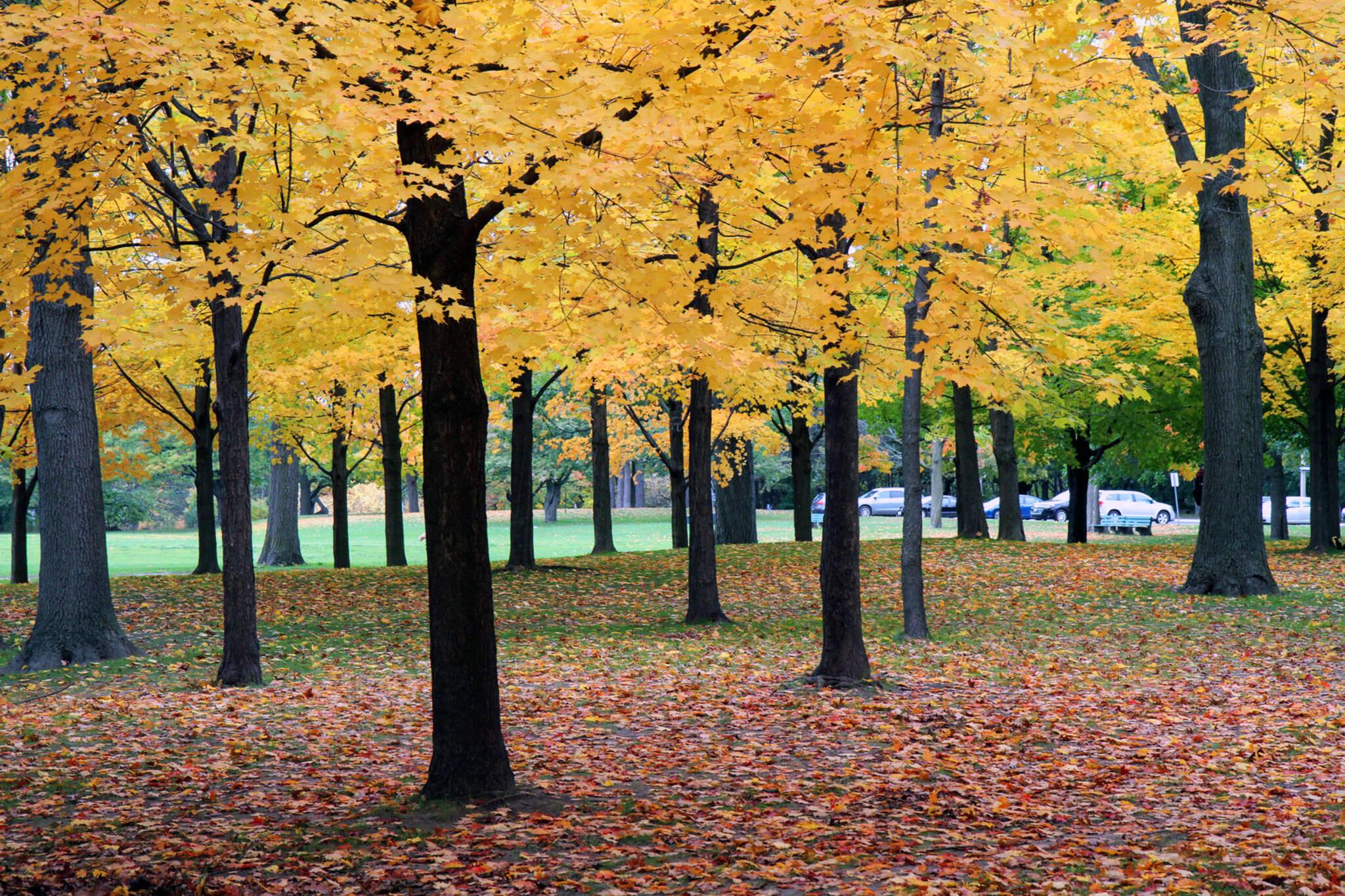 fall colours toornto