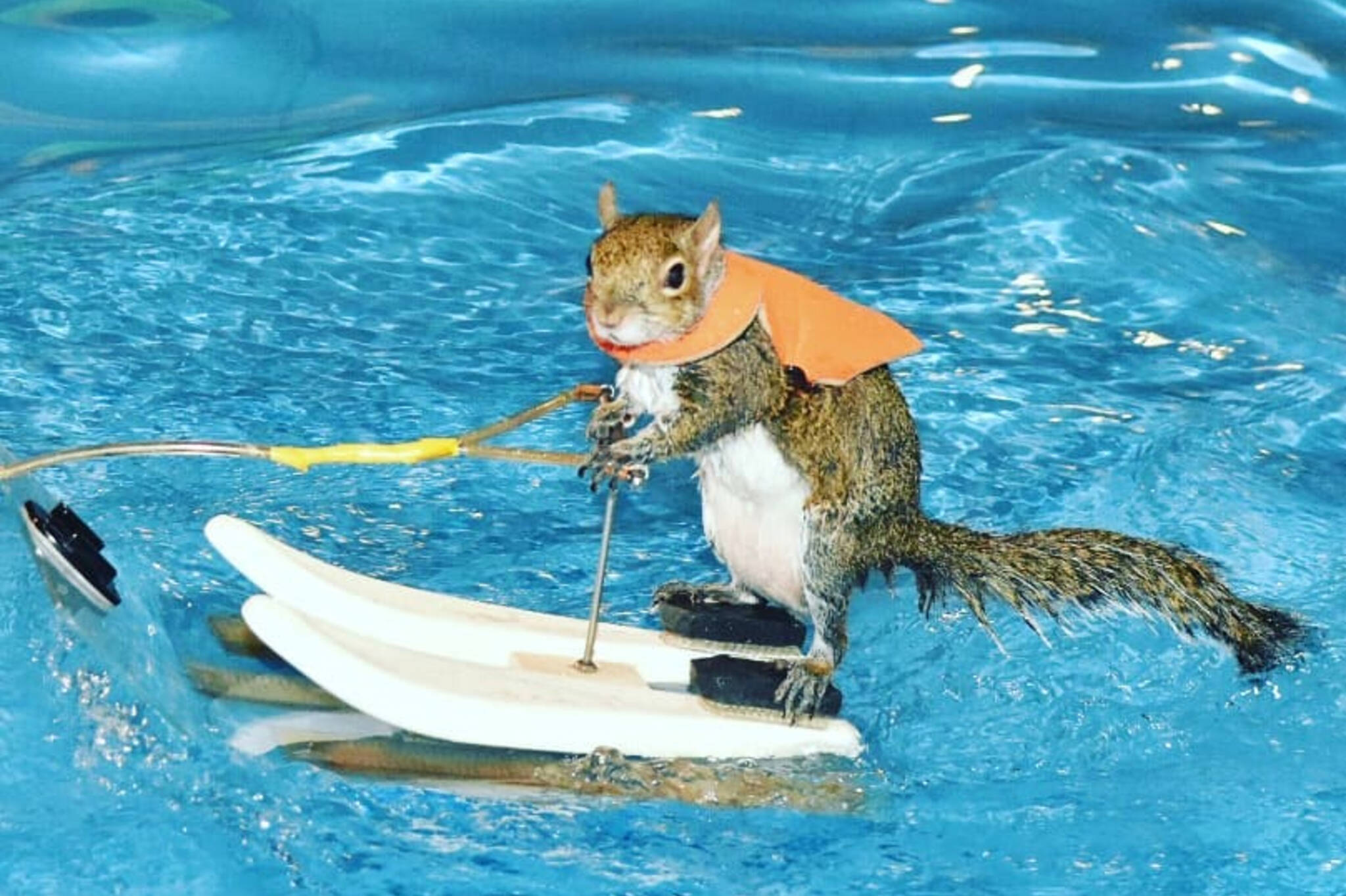 water skiing squirrel toronto