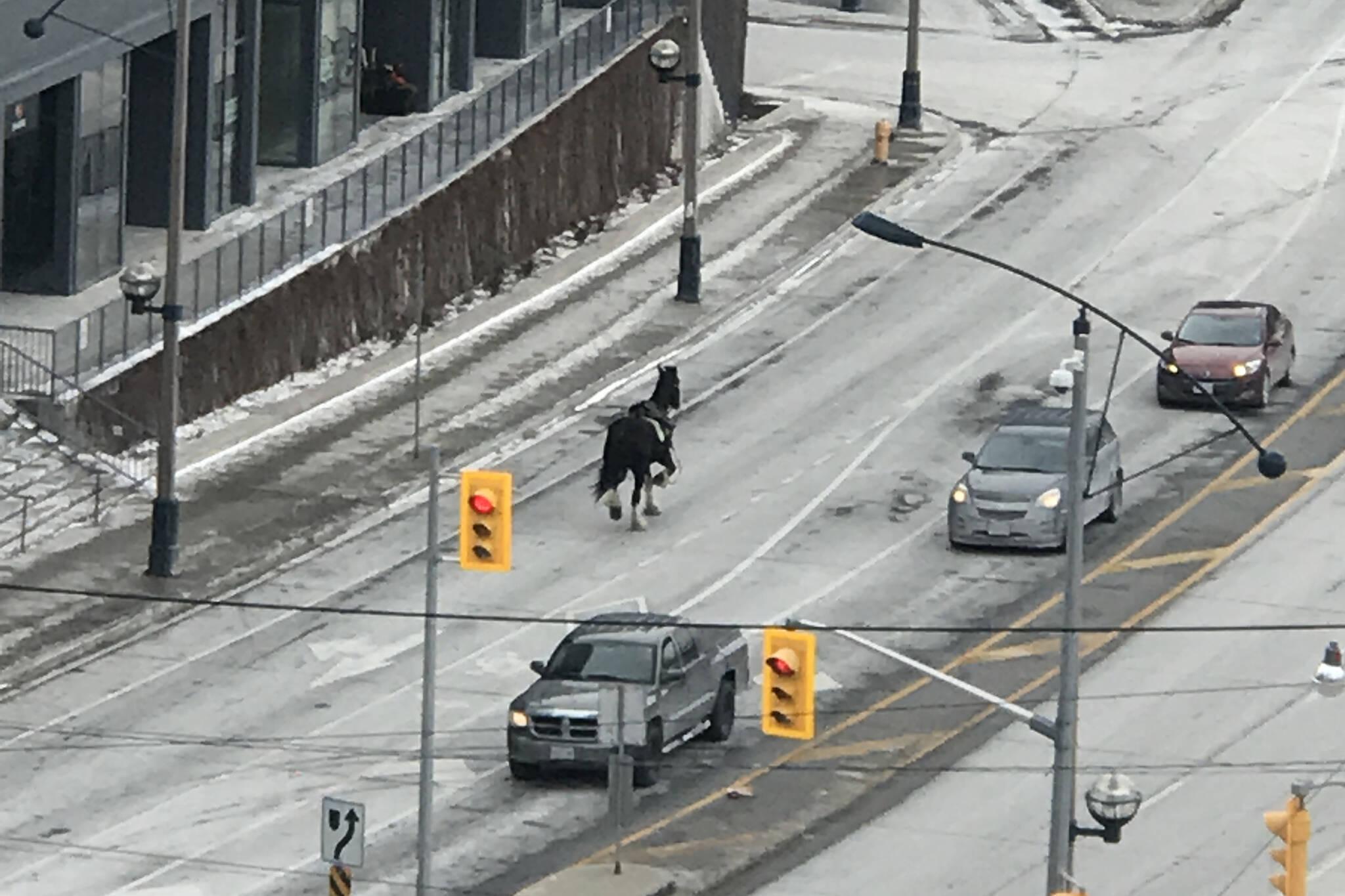 Toronto police horse