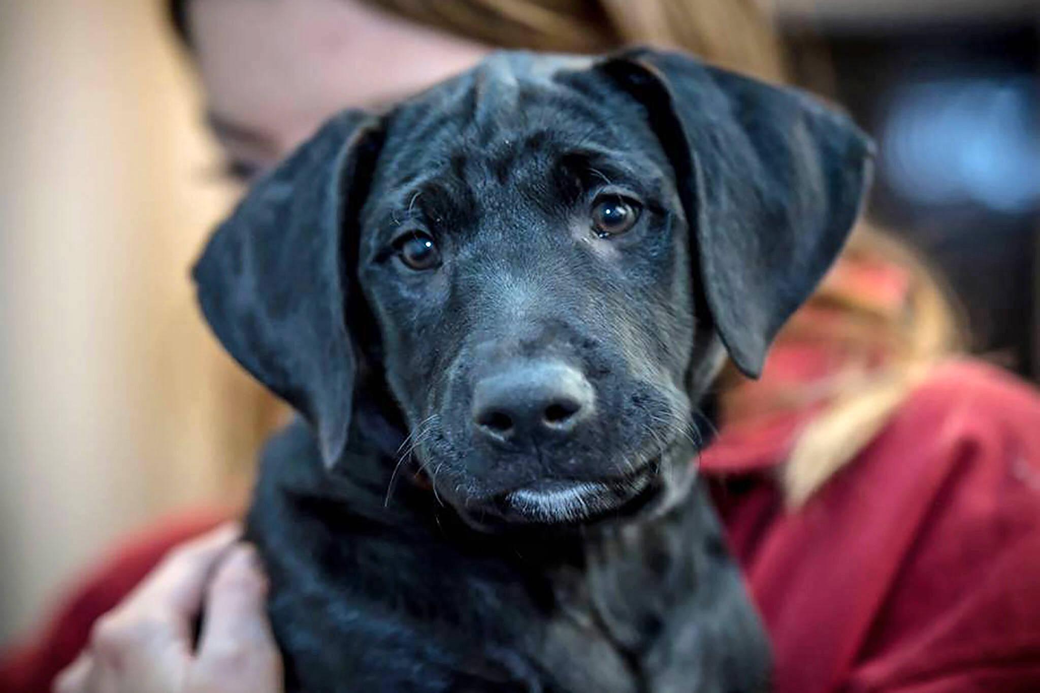 Oakville Animal Services Adopt Dog