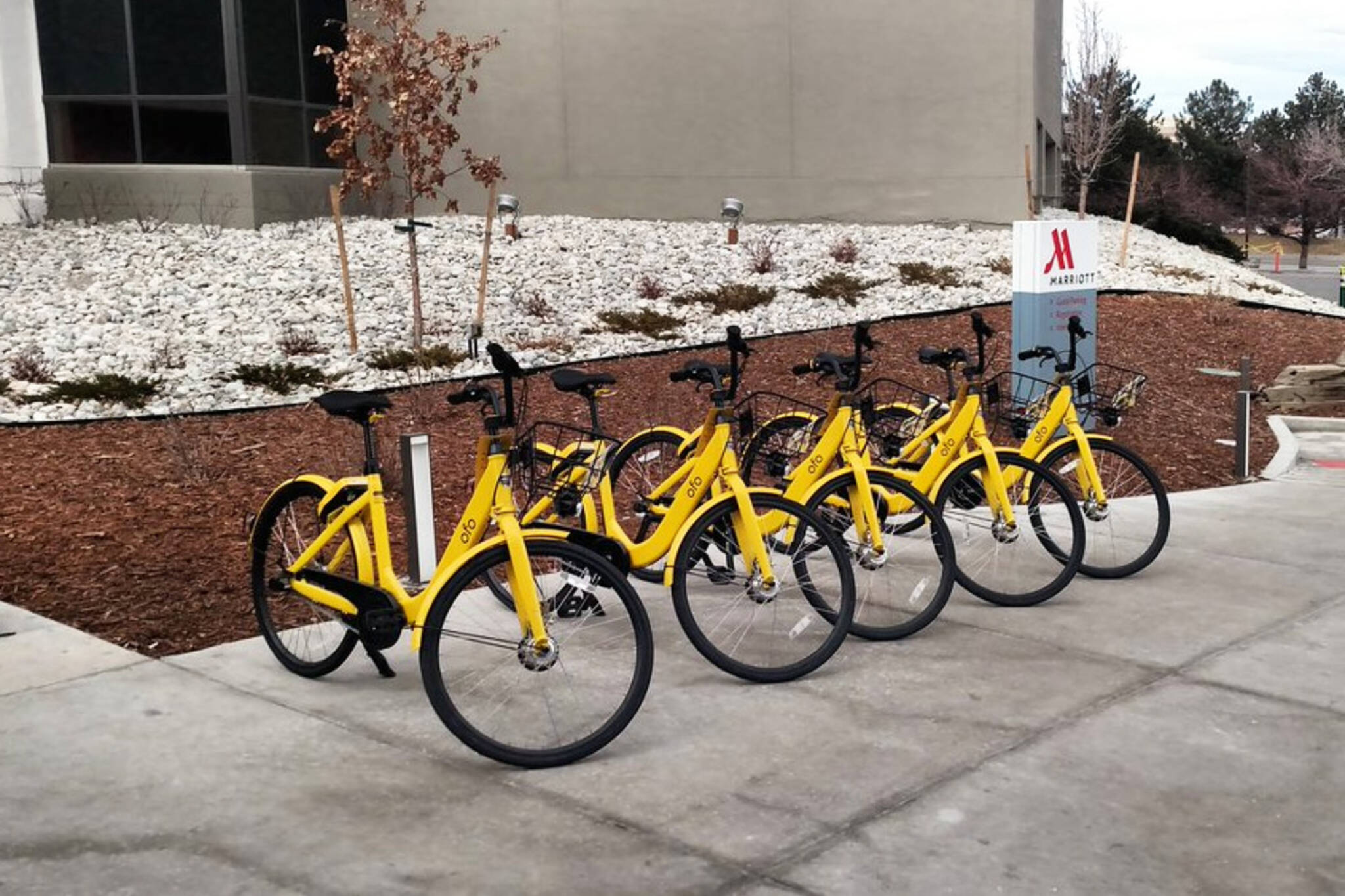 Ofo bike sharing