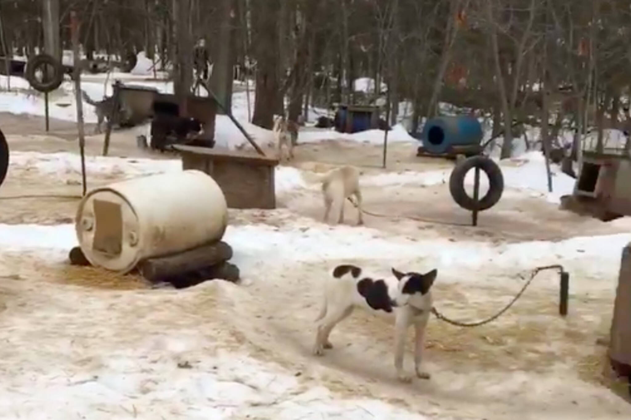 Toronto Adventures dog sledding