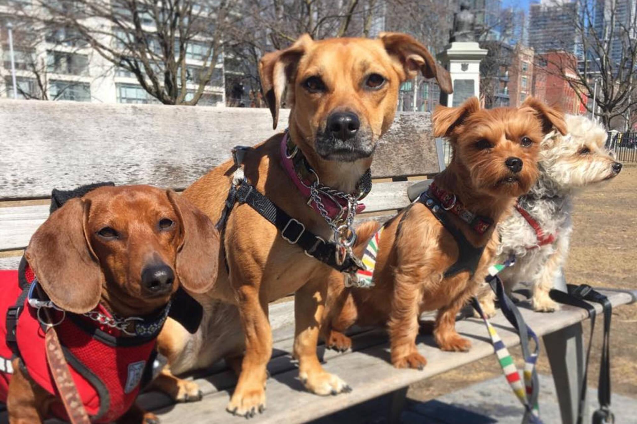Toronto dog fee