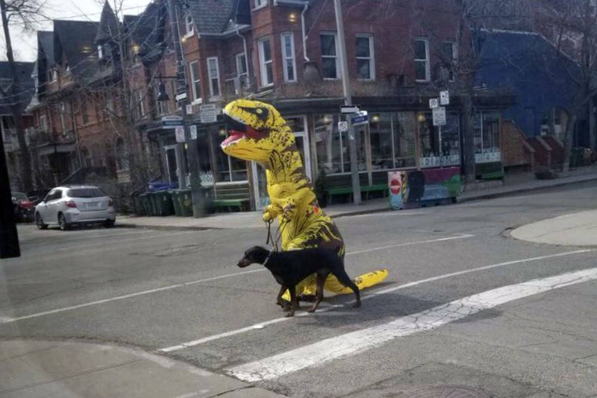 Toronto dinosaur dog walker