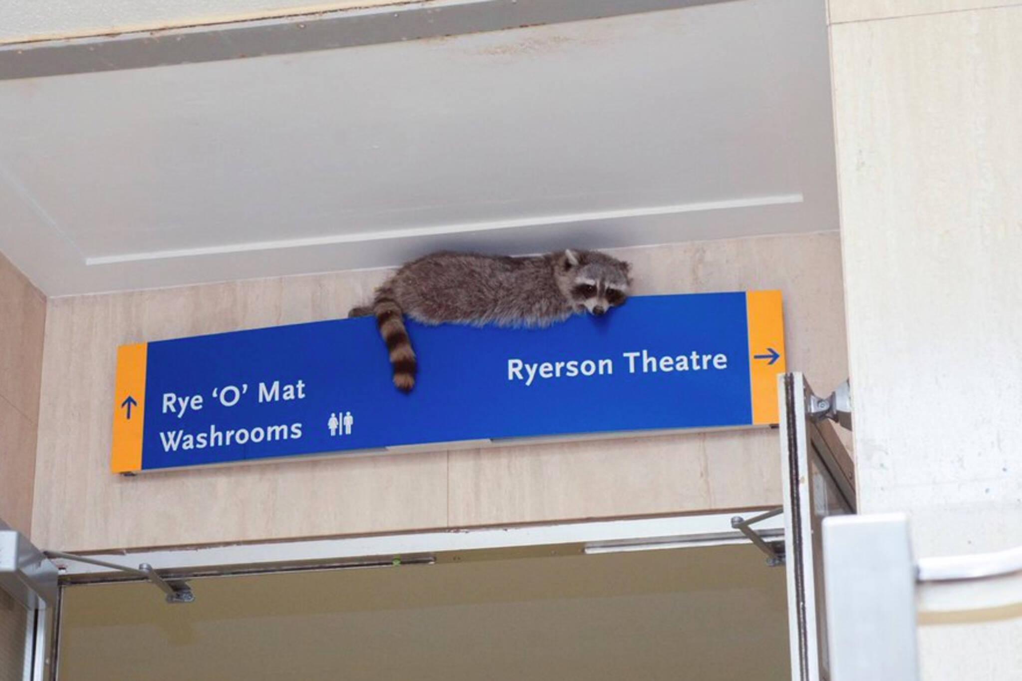 ryerson raccoon pool