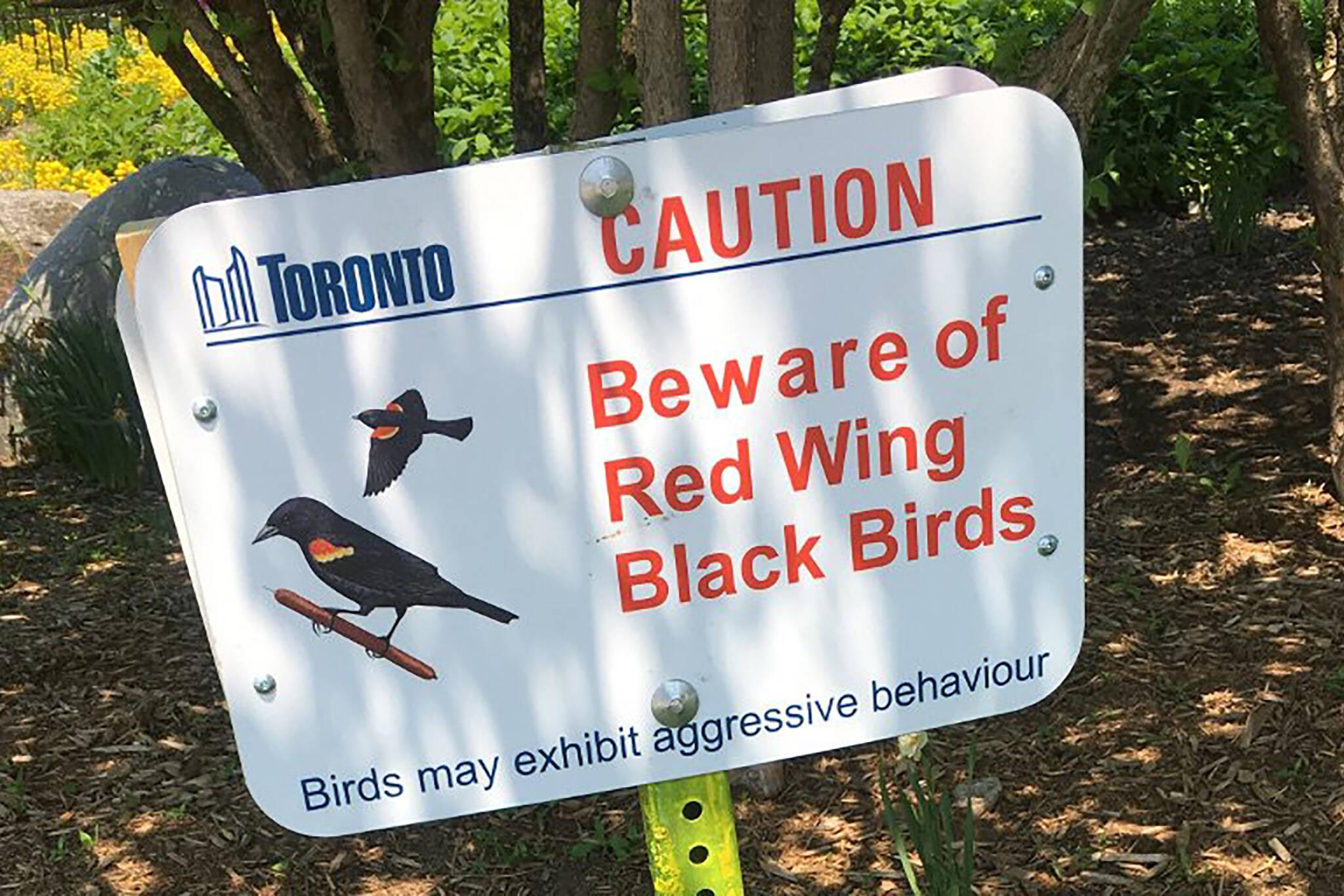 bird attack toronto