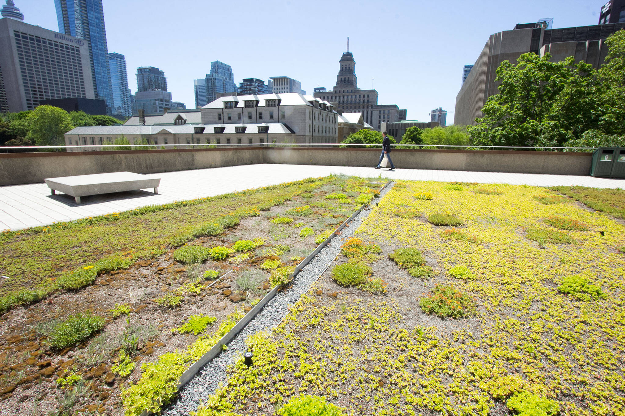 Green Roof Toronto city hall