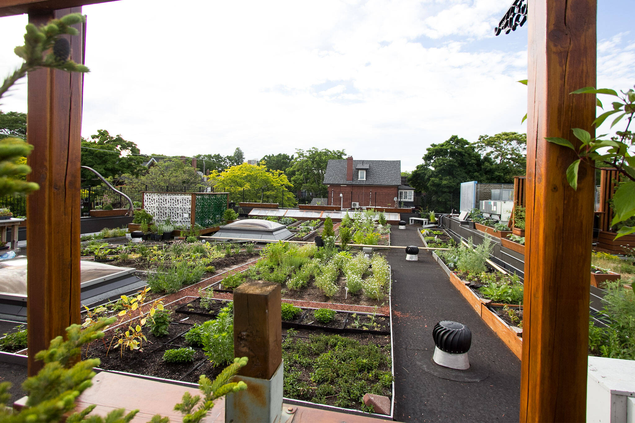 big carrot rooftop garden toronto