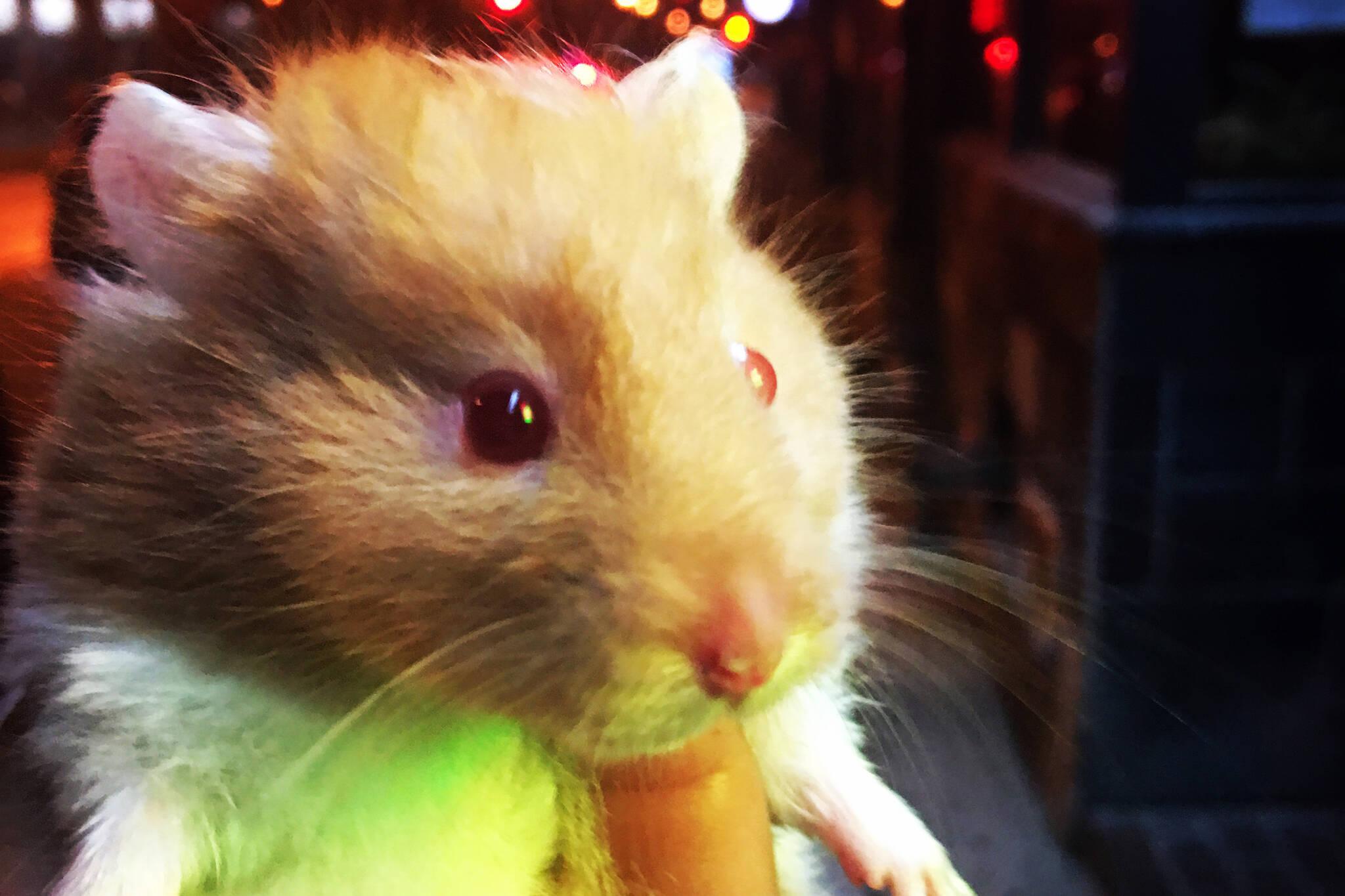 the mezz hamster