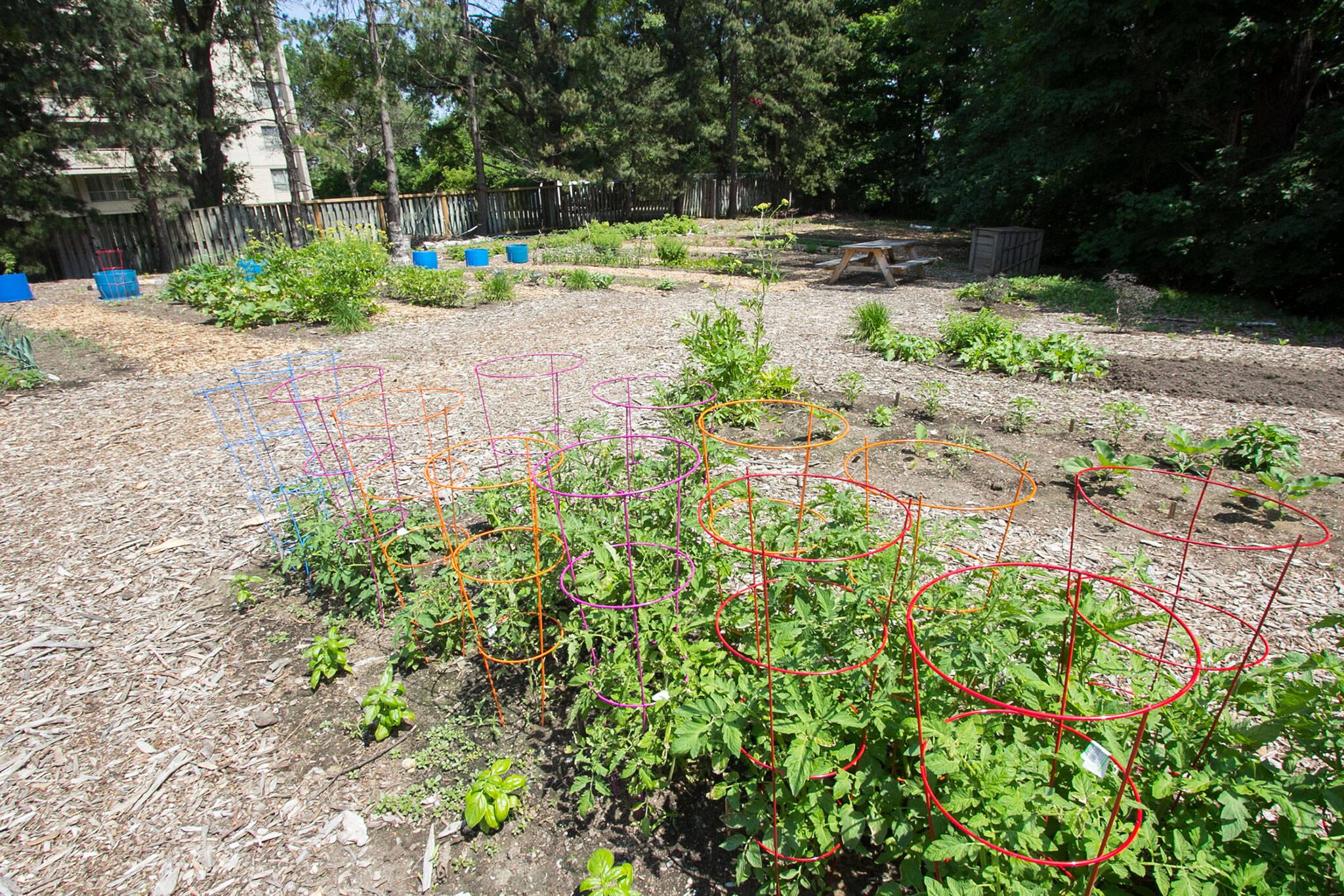 community gardens open toronto