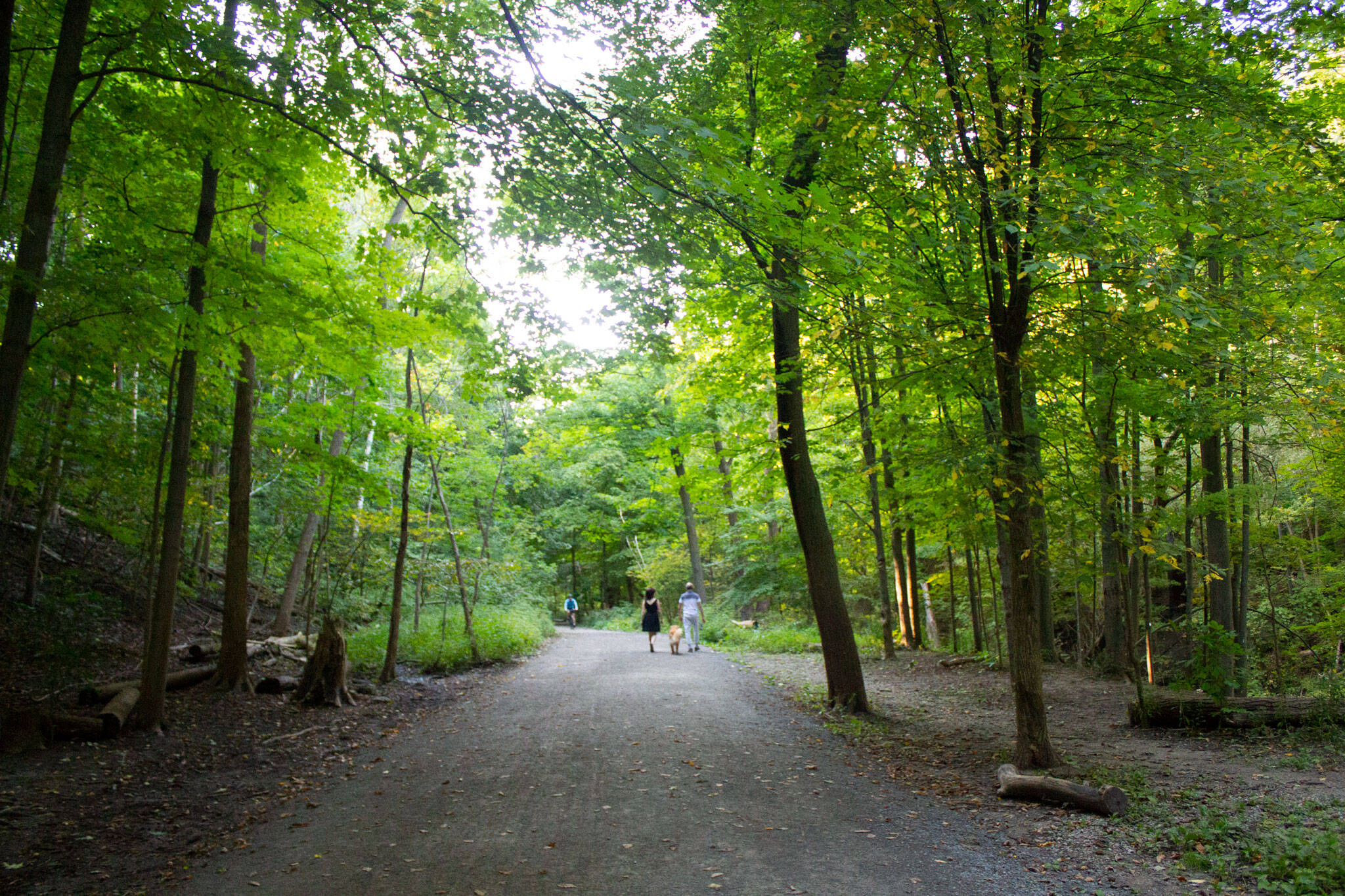 moore park ravine