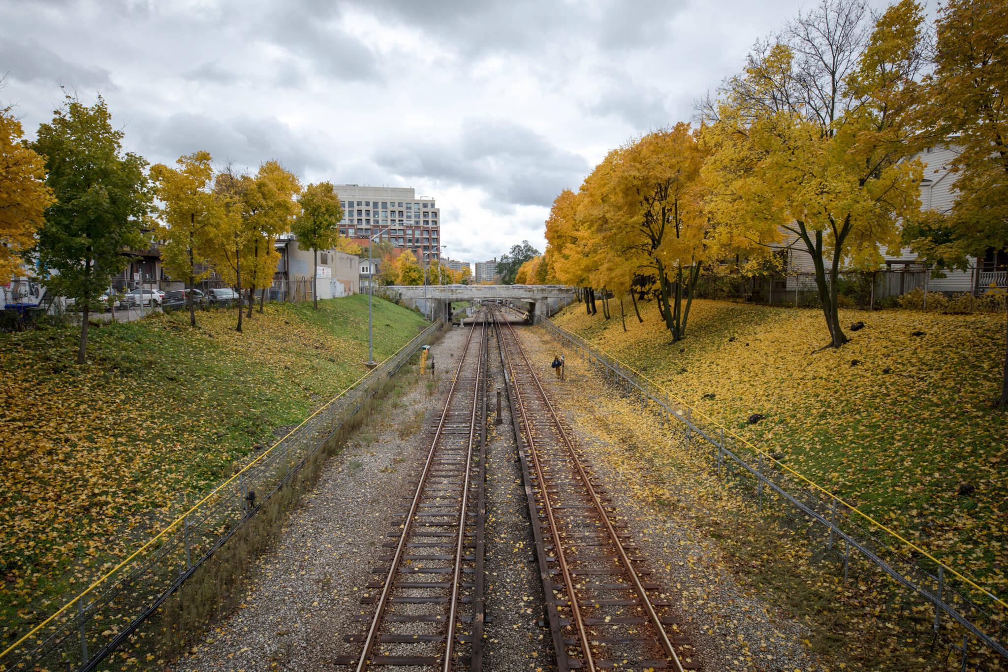 ttc subway leaves