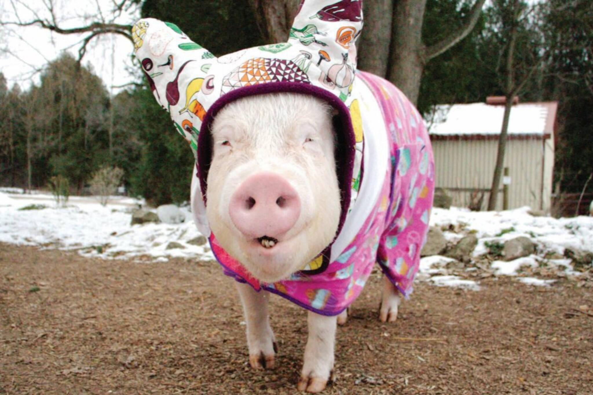 Esther Wonder Pig award
