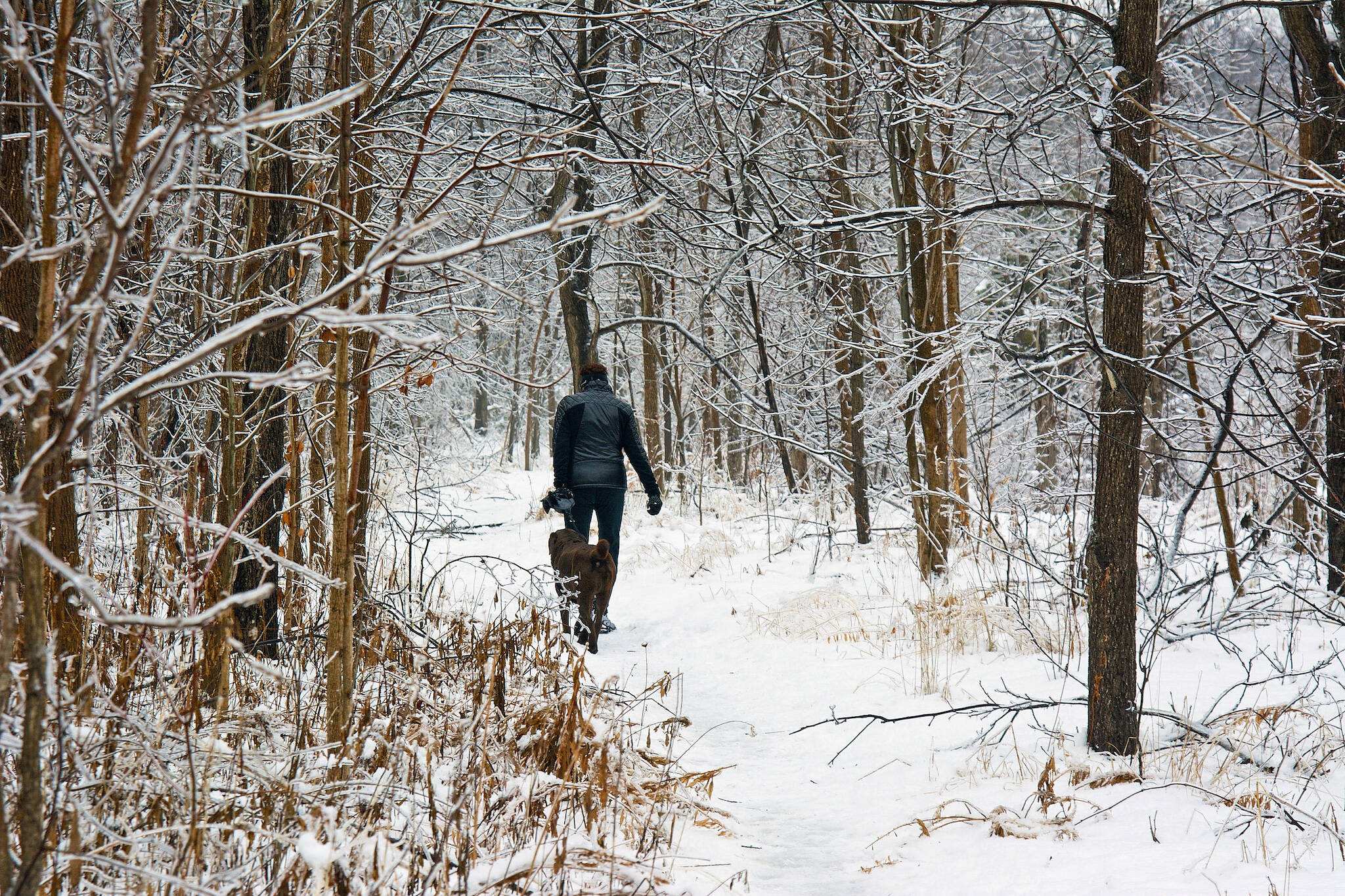 winter hikes toronto