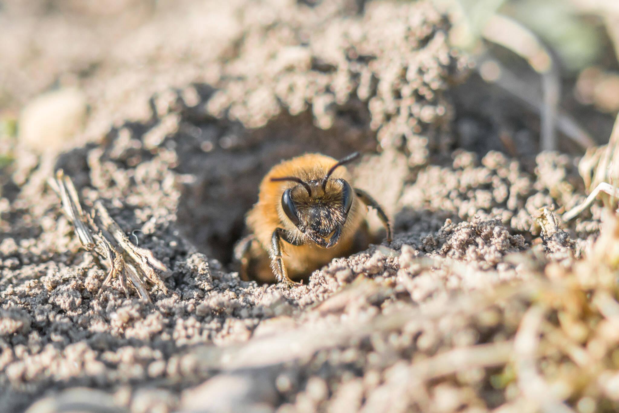 bees toronto