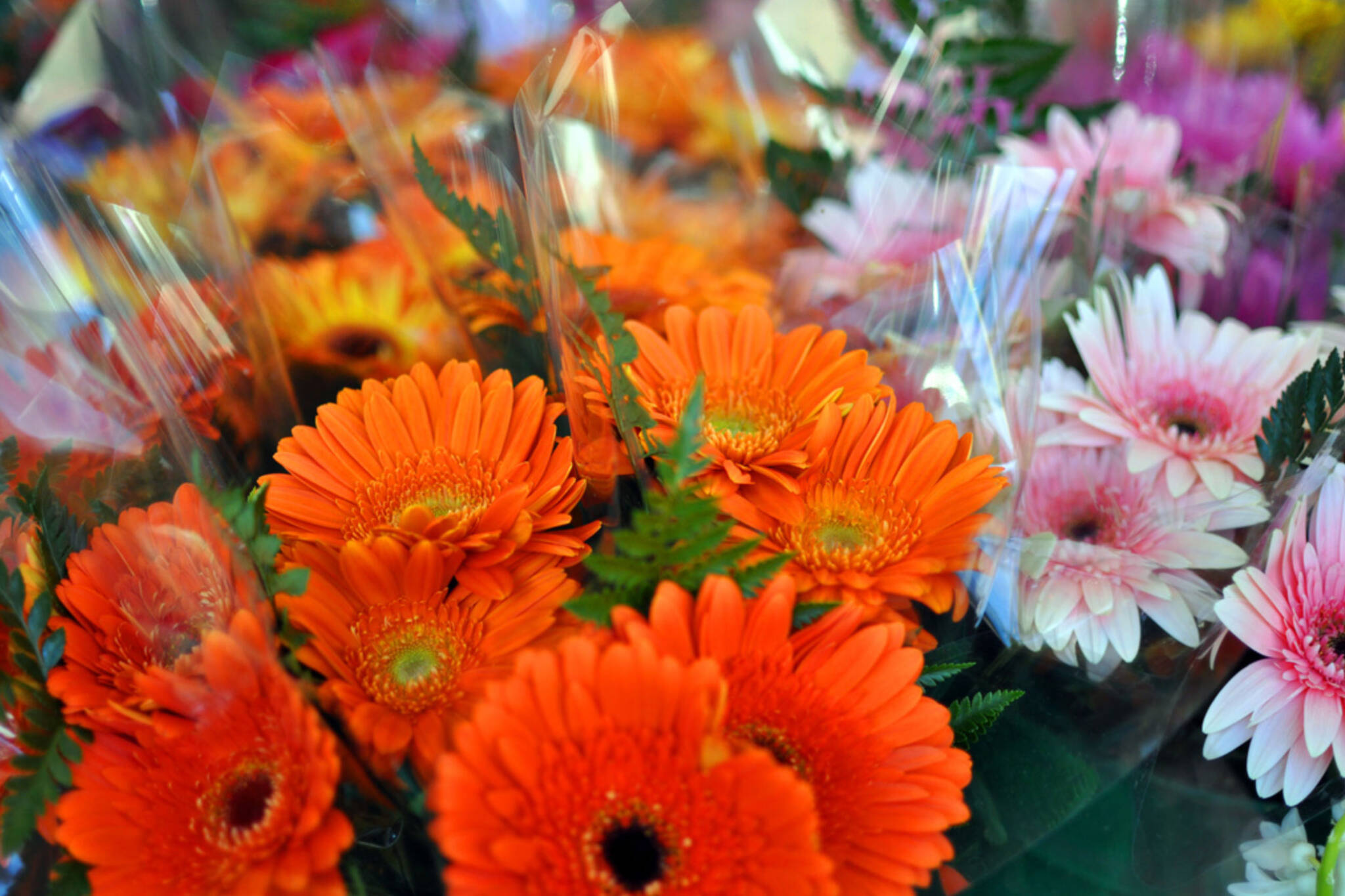 The best florists in toronto florists toronto izmirmasajfo