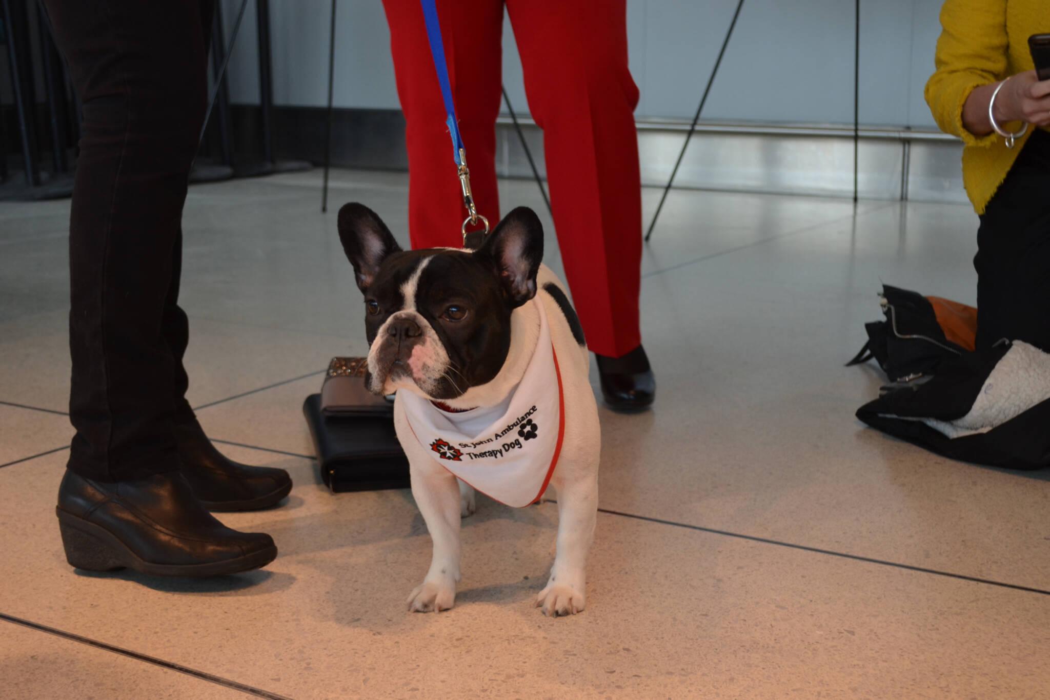 toronto airport dogs