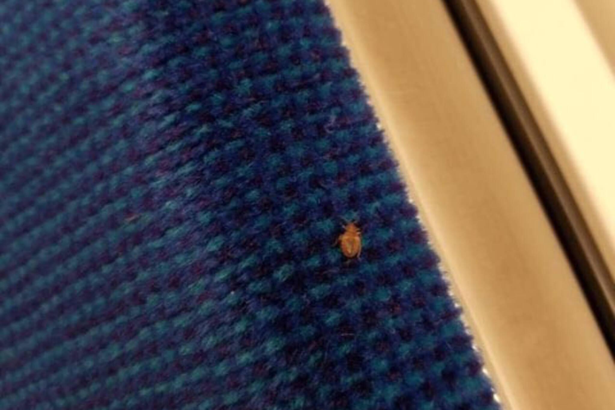 bedbug toronto