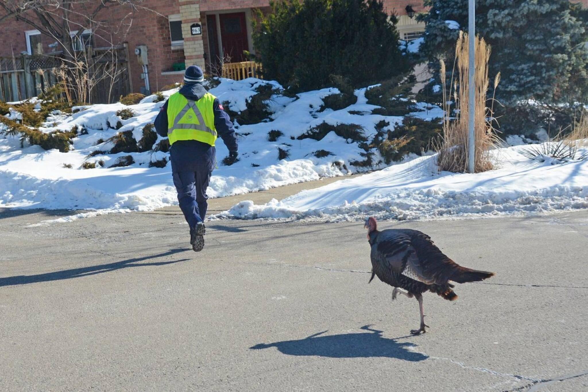 mississauga turkey attack