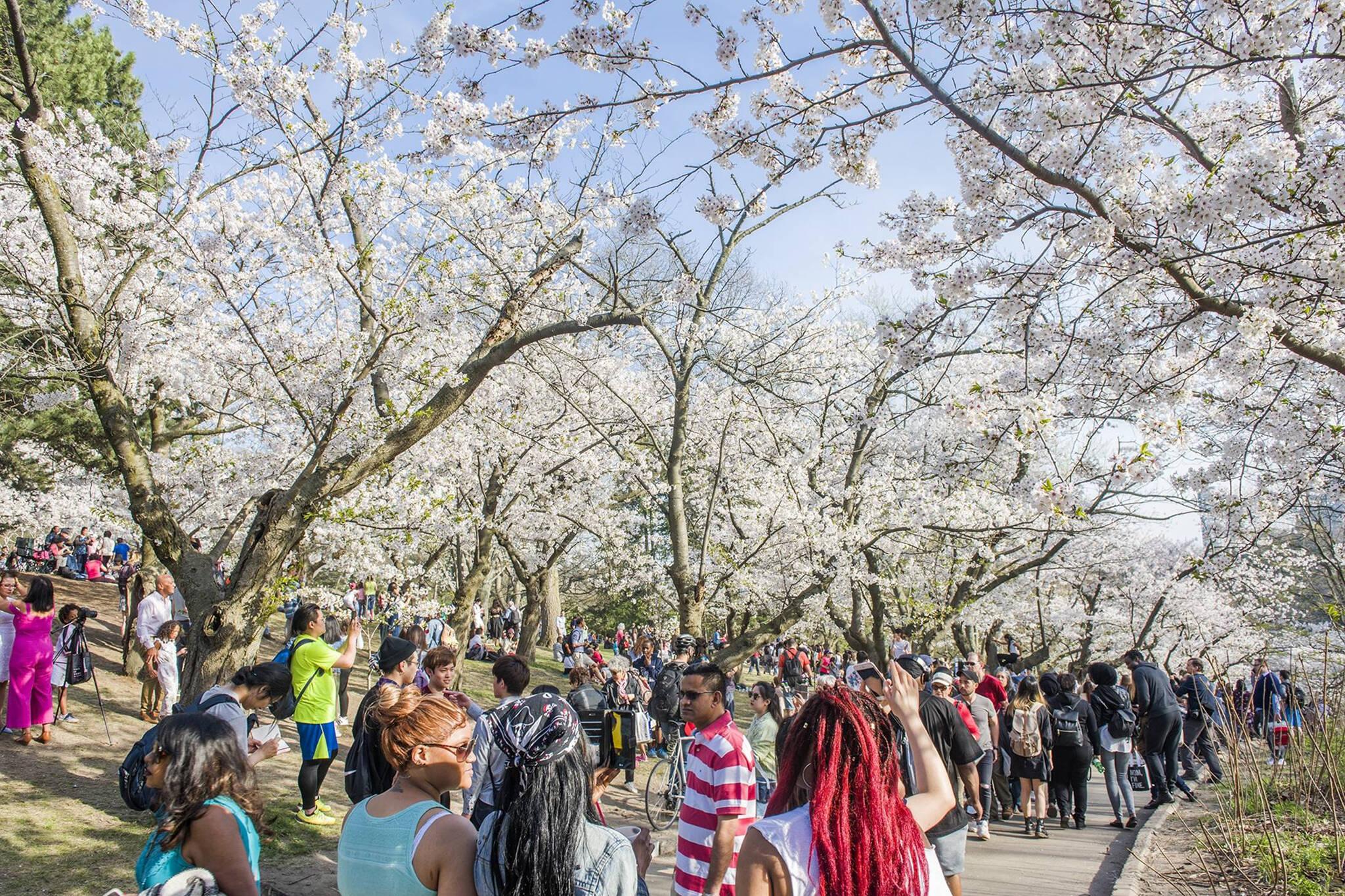 spring activities toronto