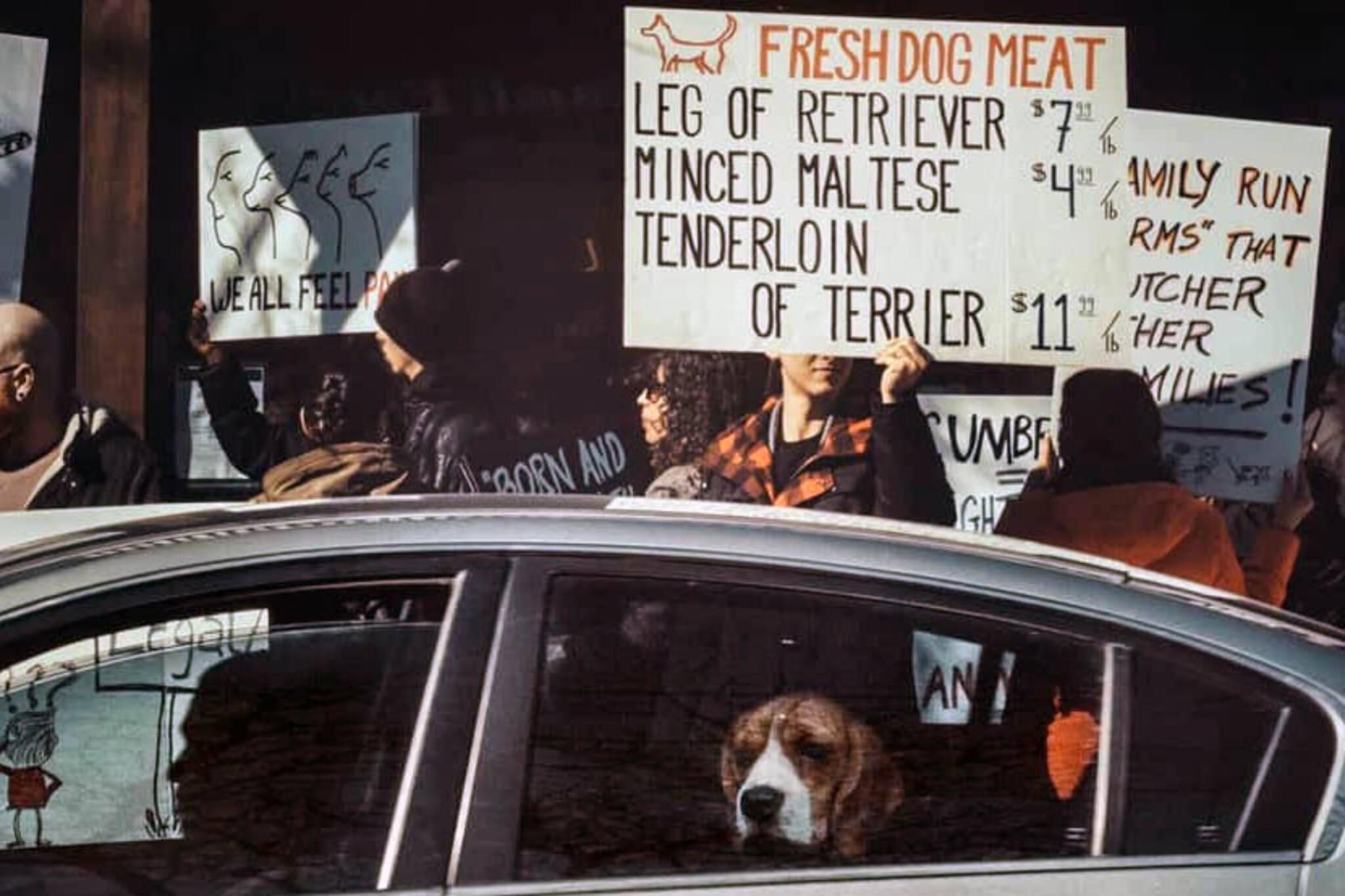 dog meat toronto
