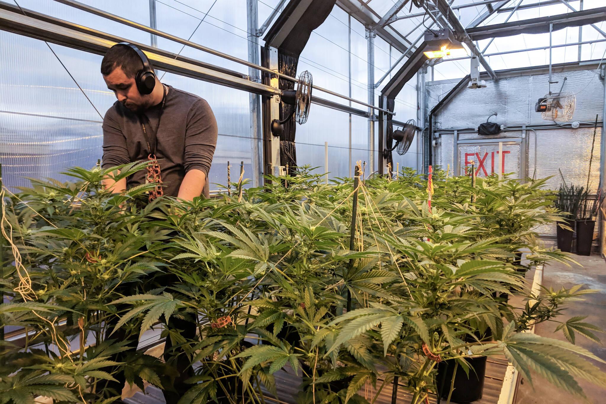 ontario cannabis jobs