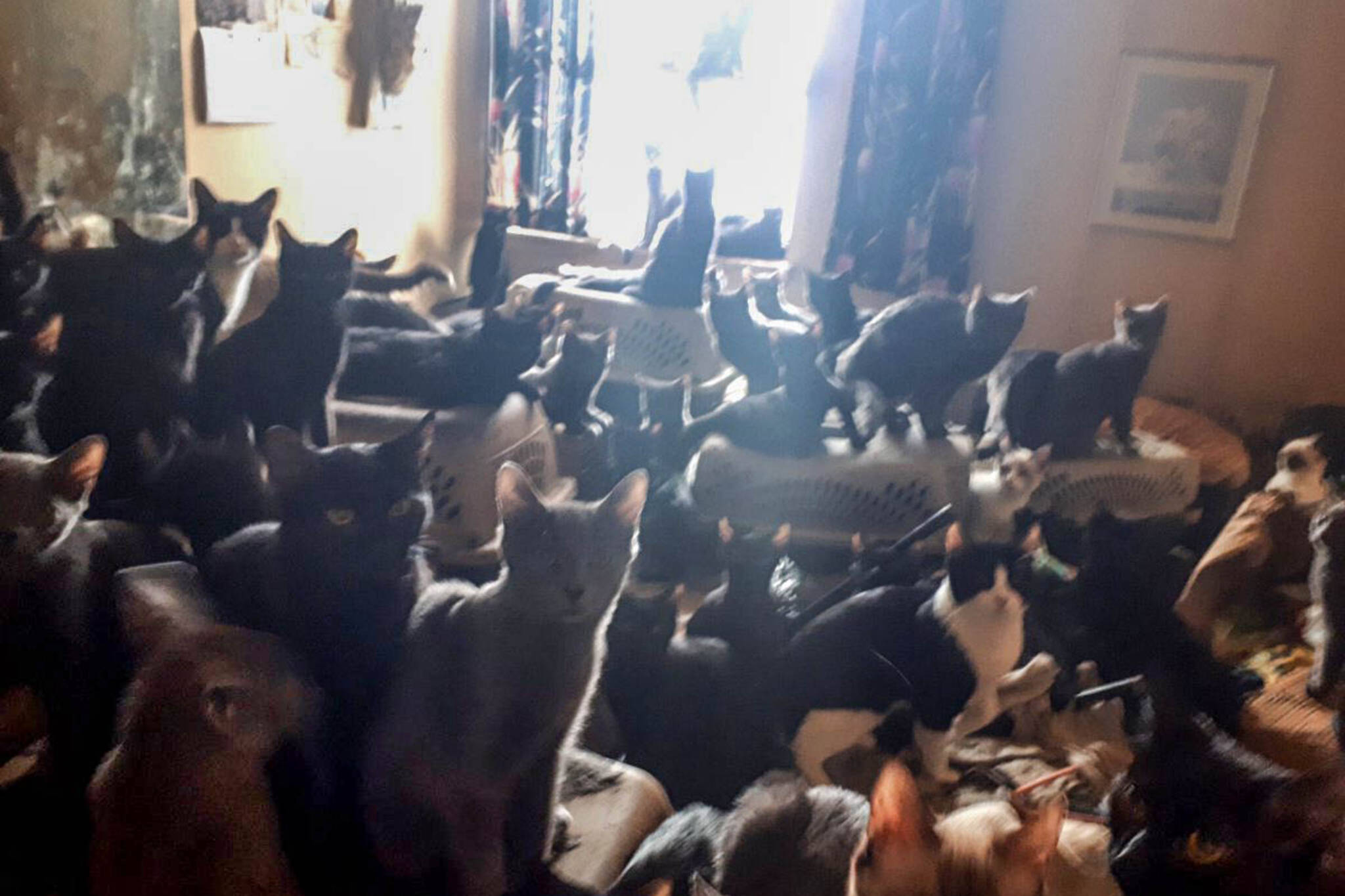 300 cats toronto
