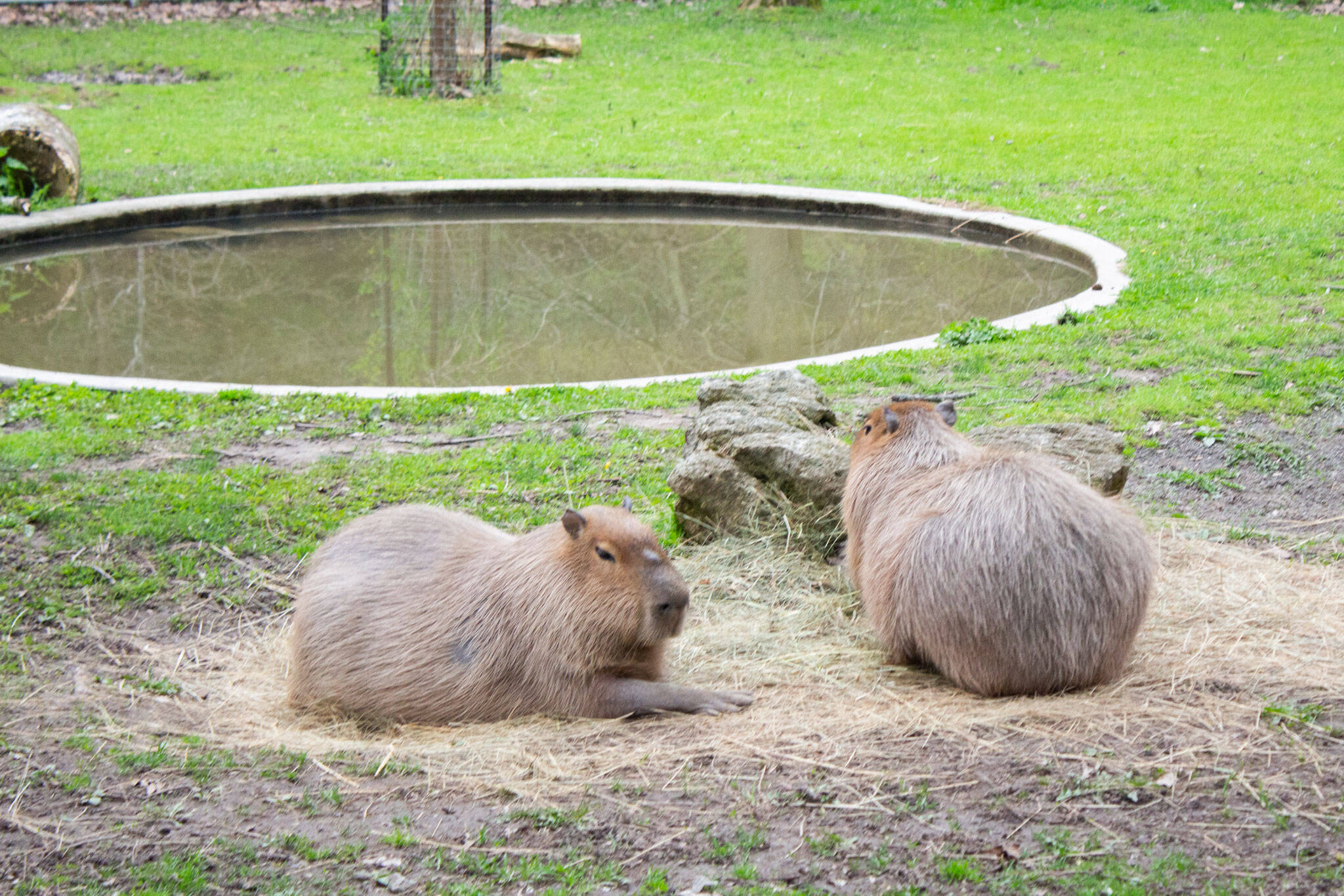 high park zoo toronto