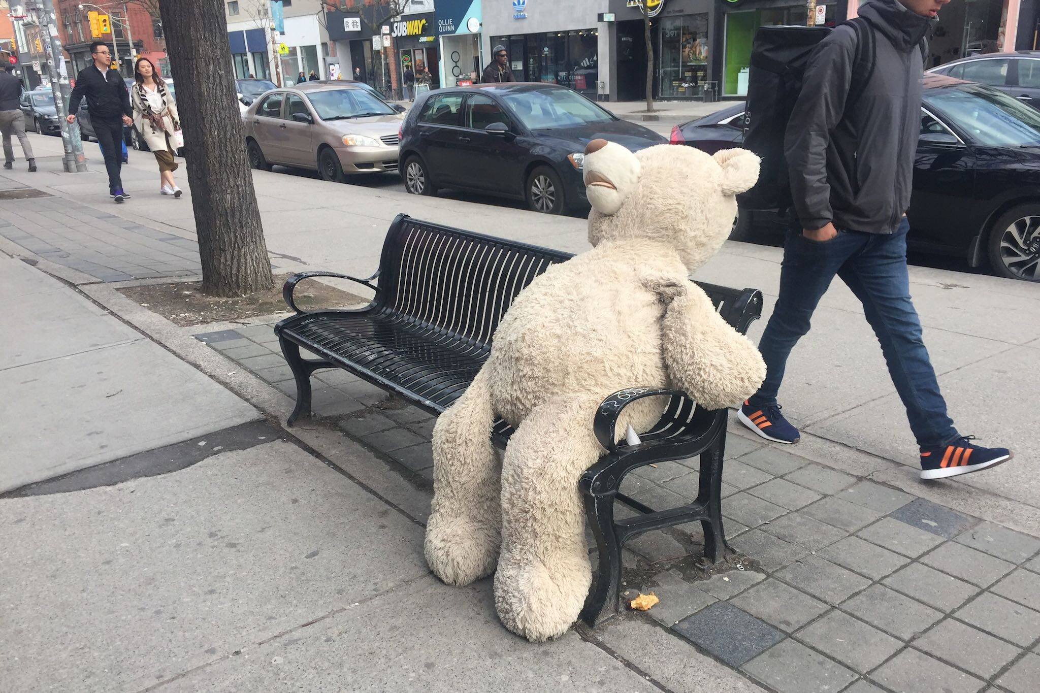 teddy bear toronto