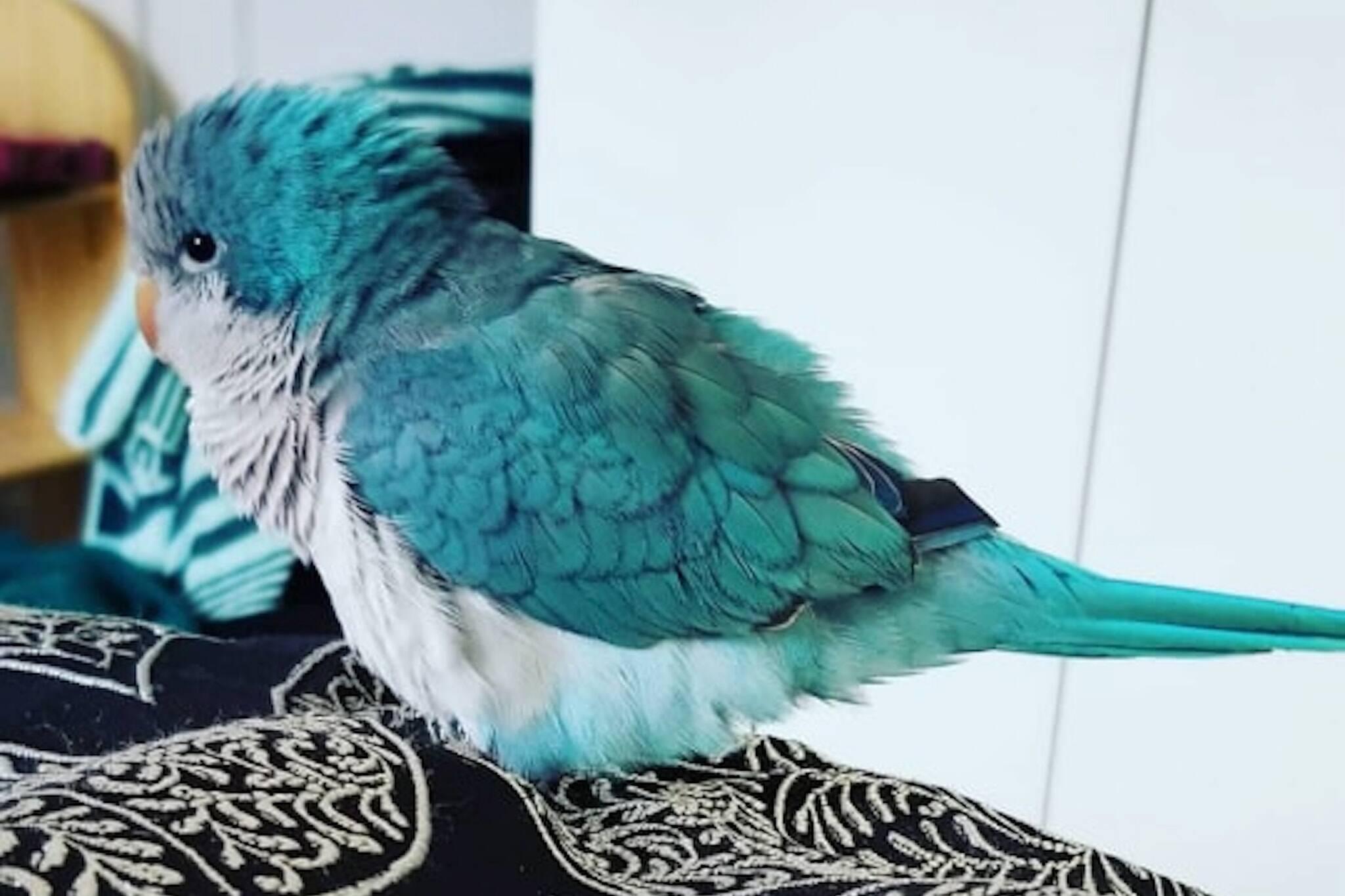 missing bird Toronto