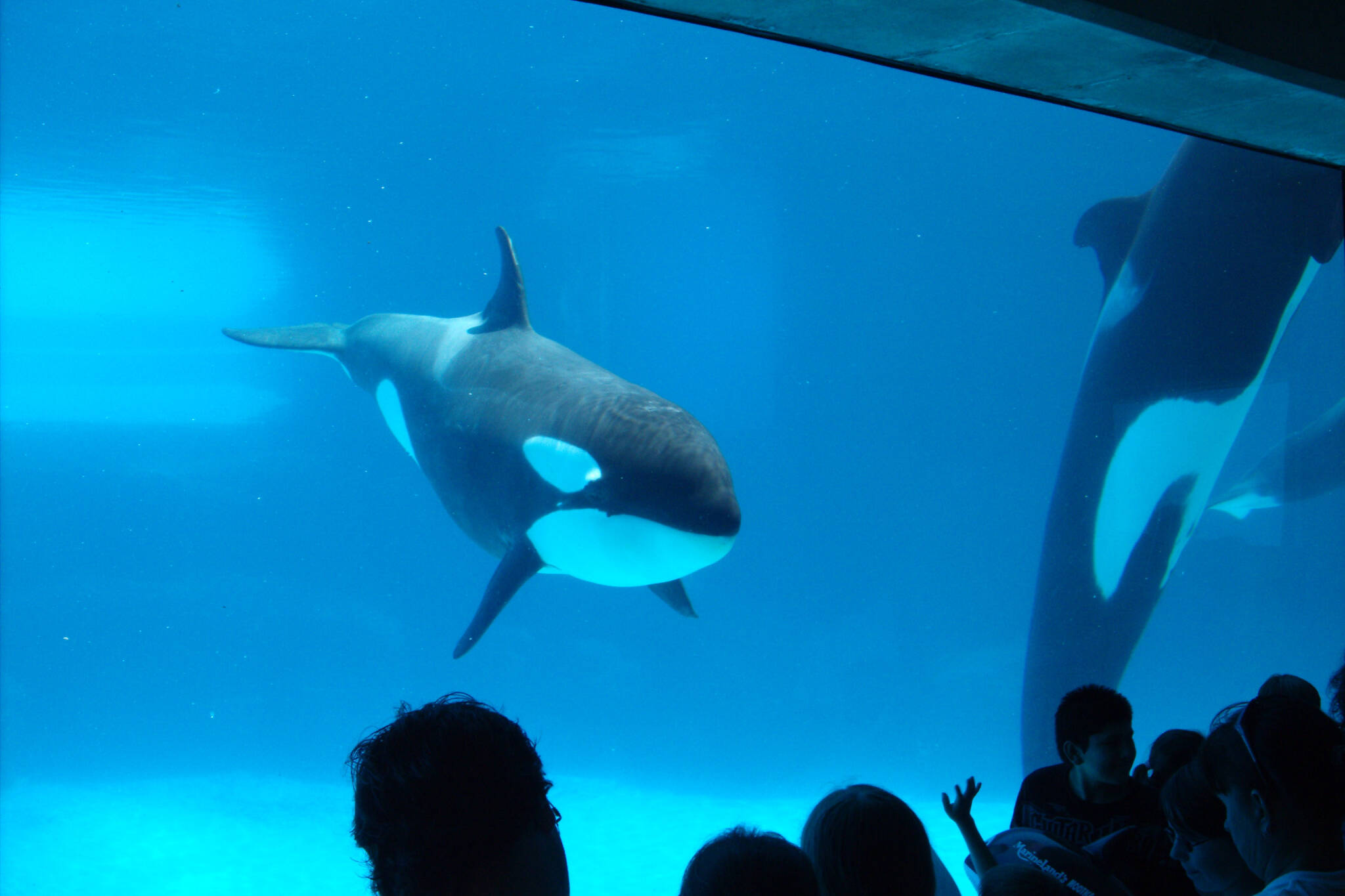 canada bans whale captivity