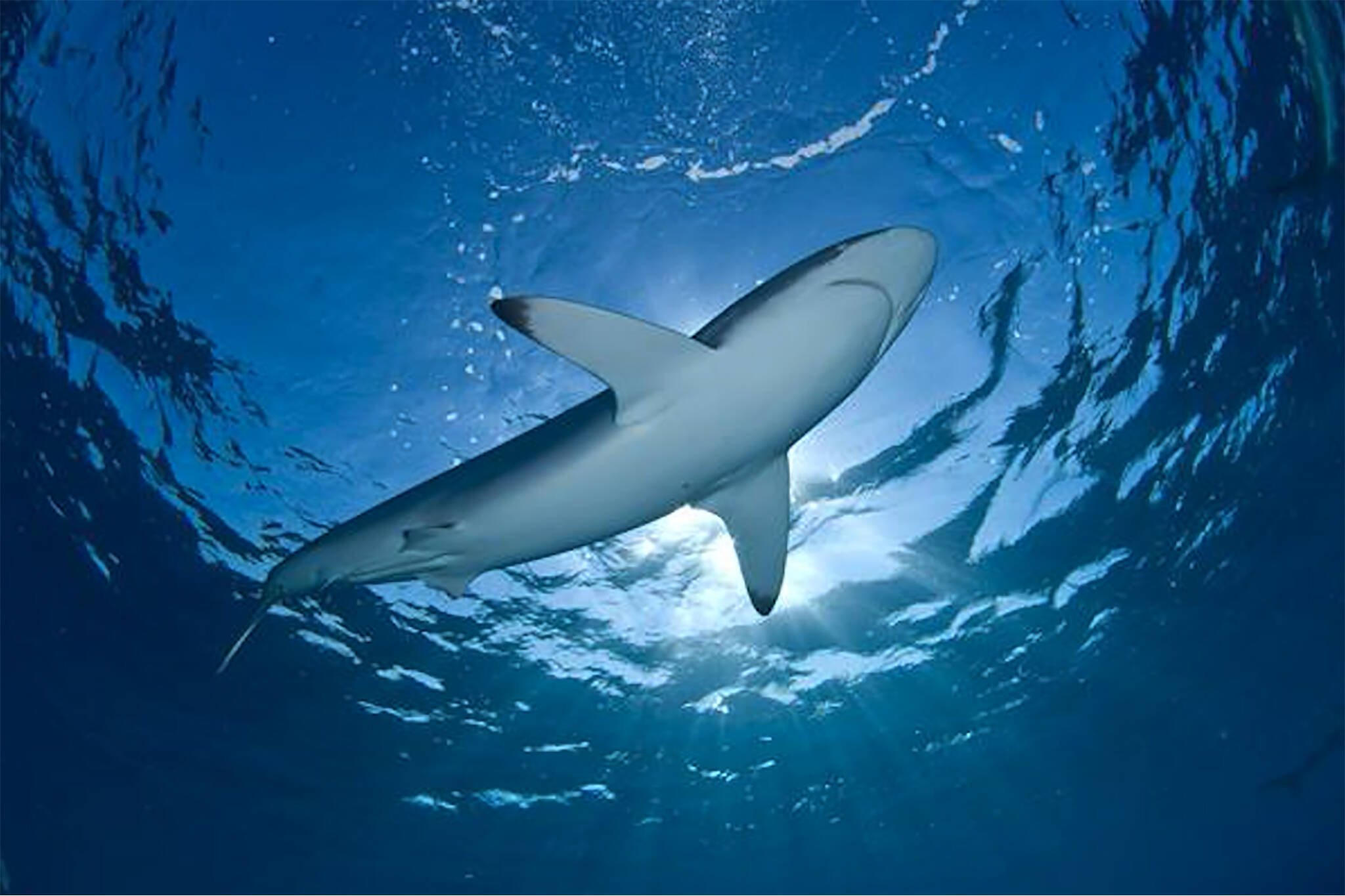 shark fin ban