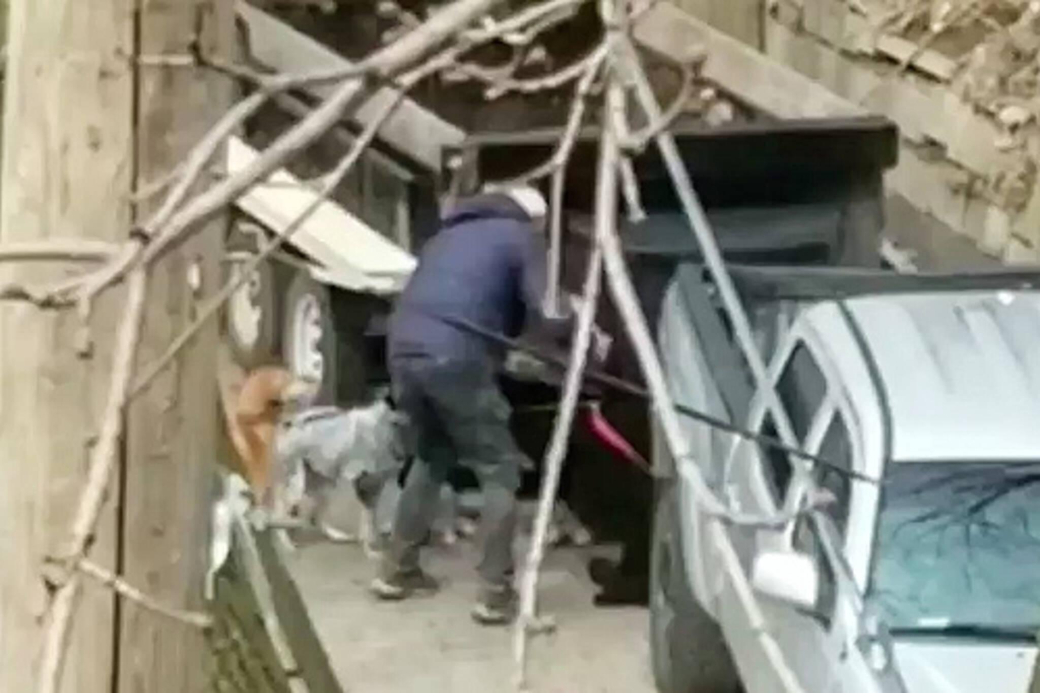dog walker abuse toronto