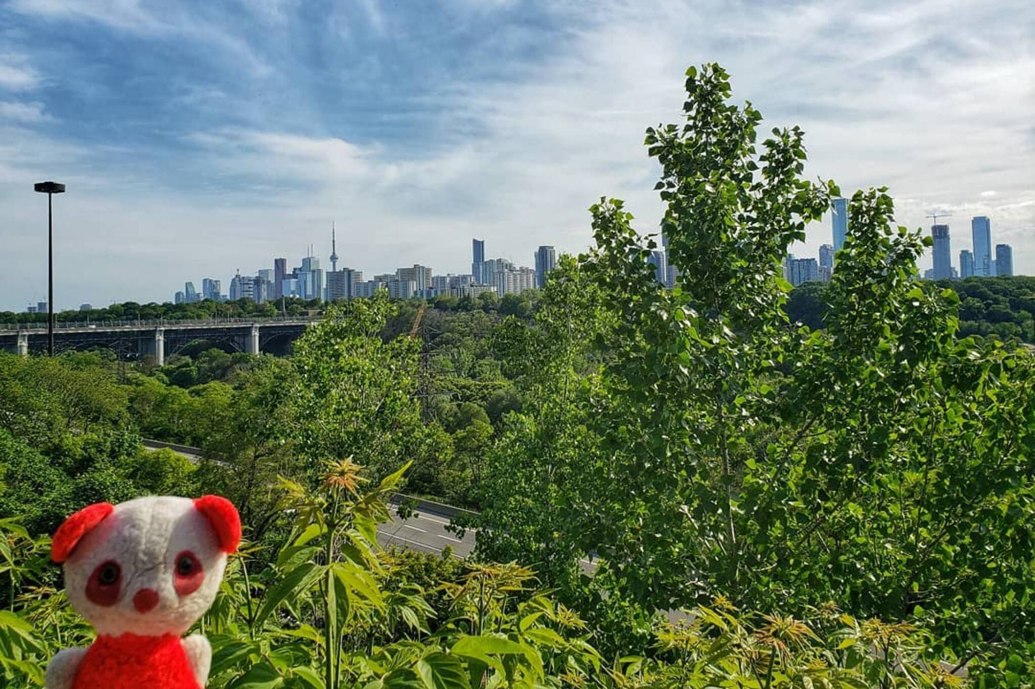 little red bear toronto