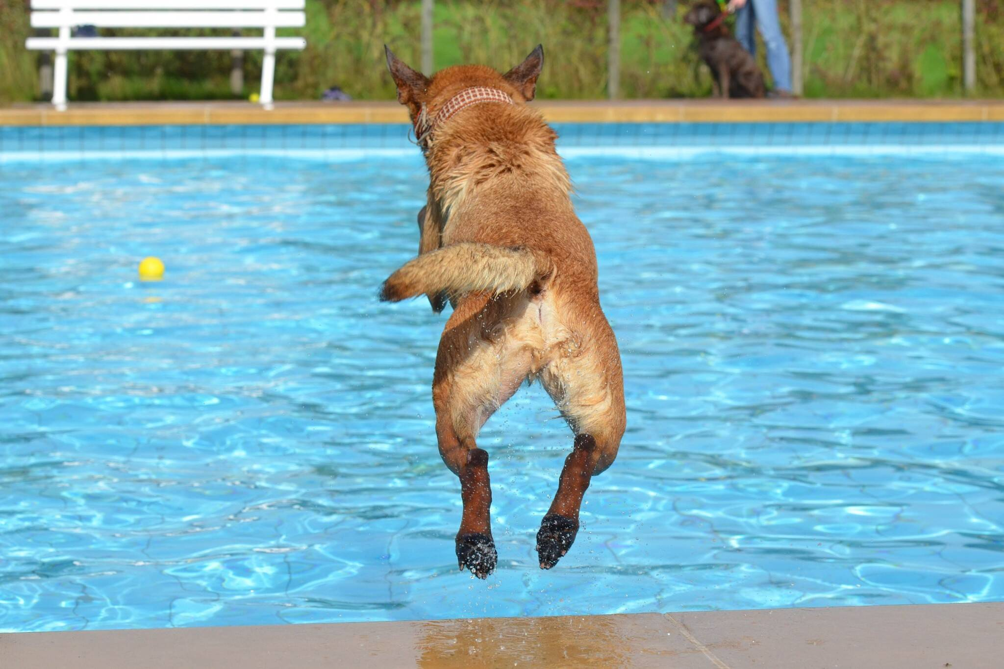 dogs public pools toronto