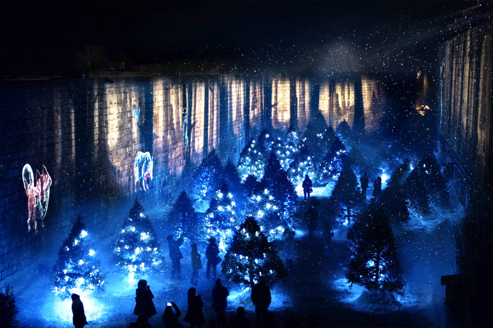 toronto zoo light show