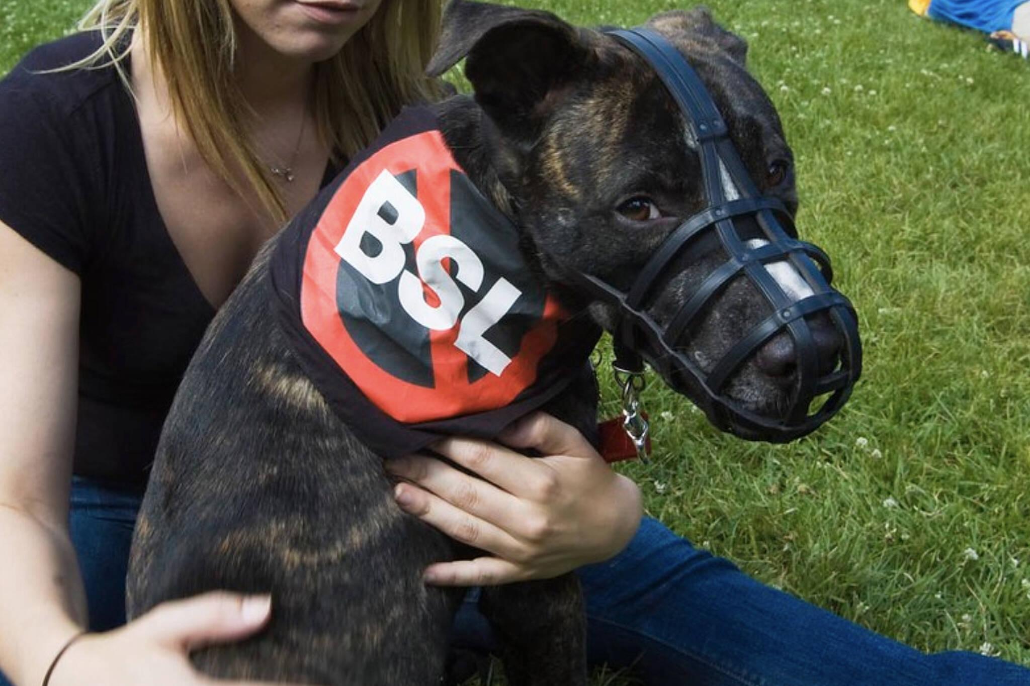 pit bull ban ontario