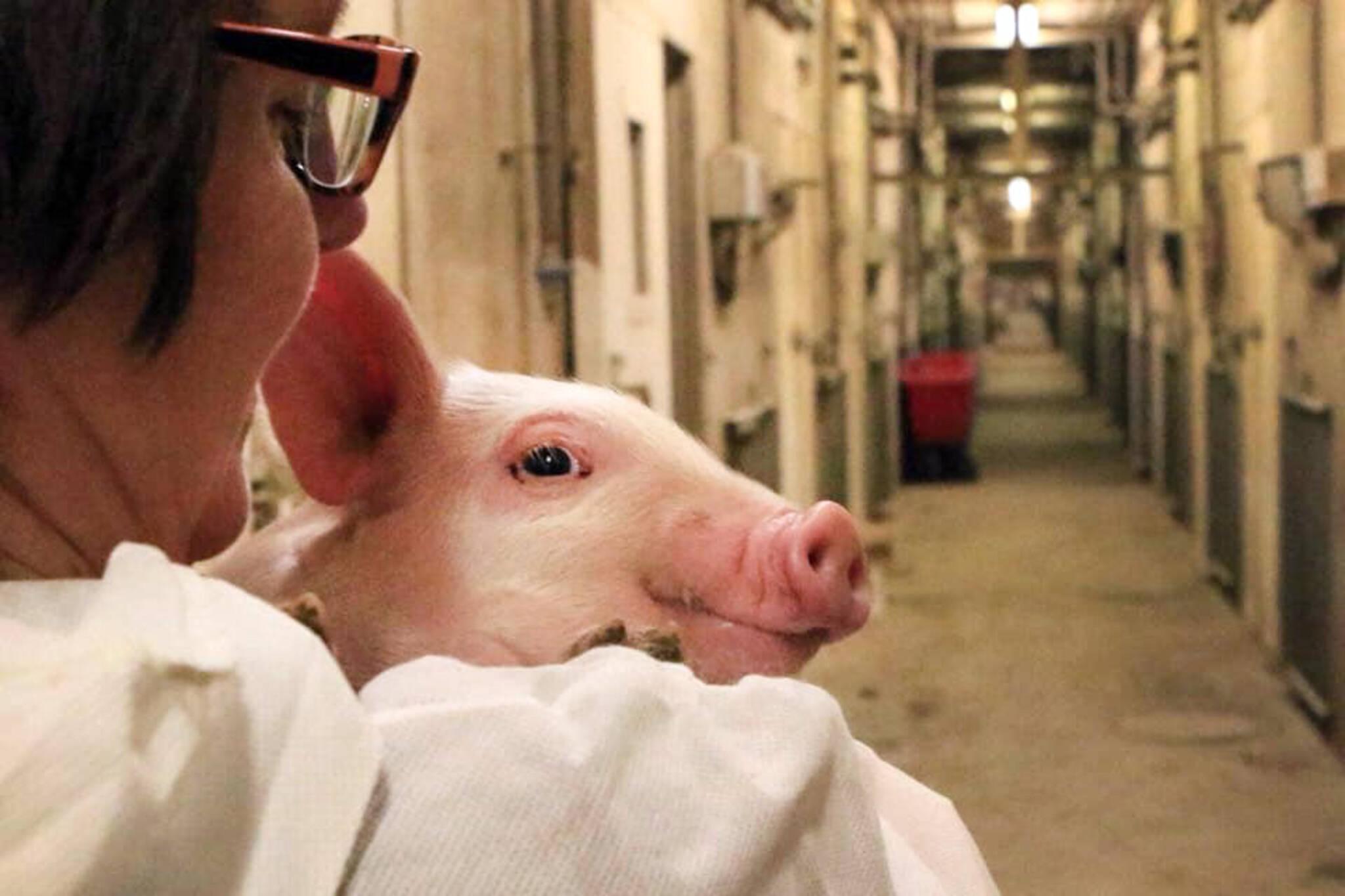 animal rights ontario