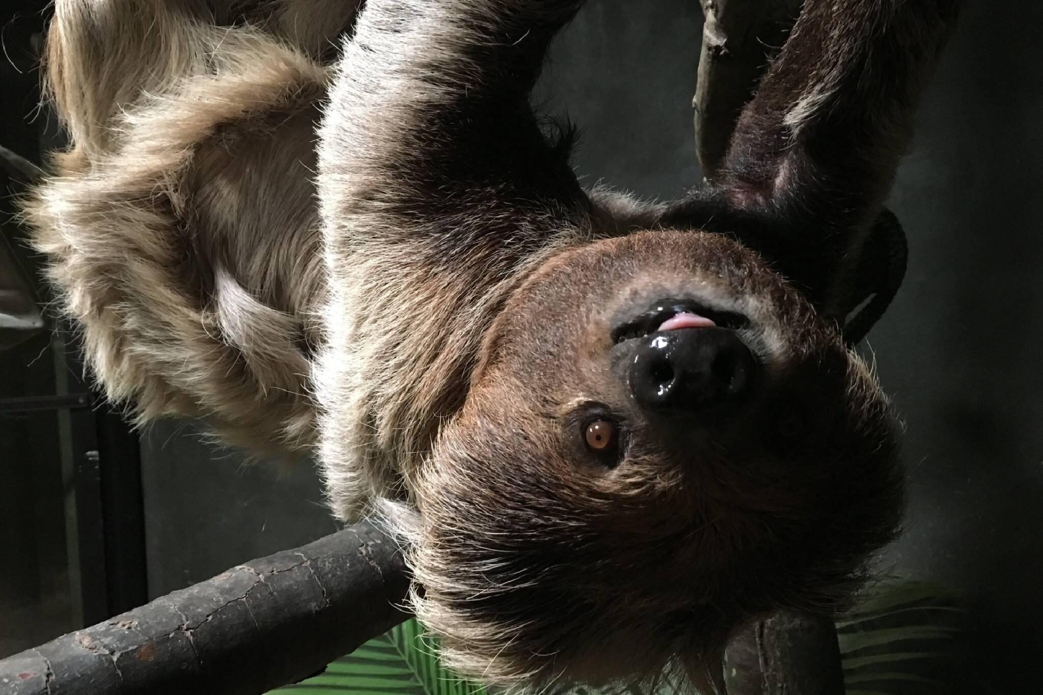 toronto zoo animals new years resolutions