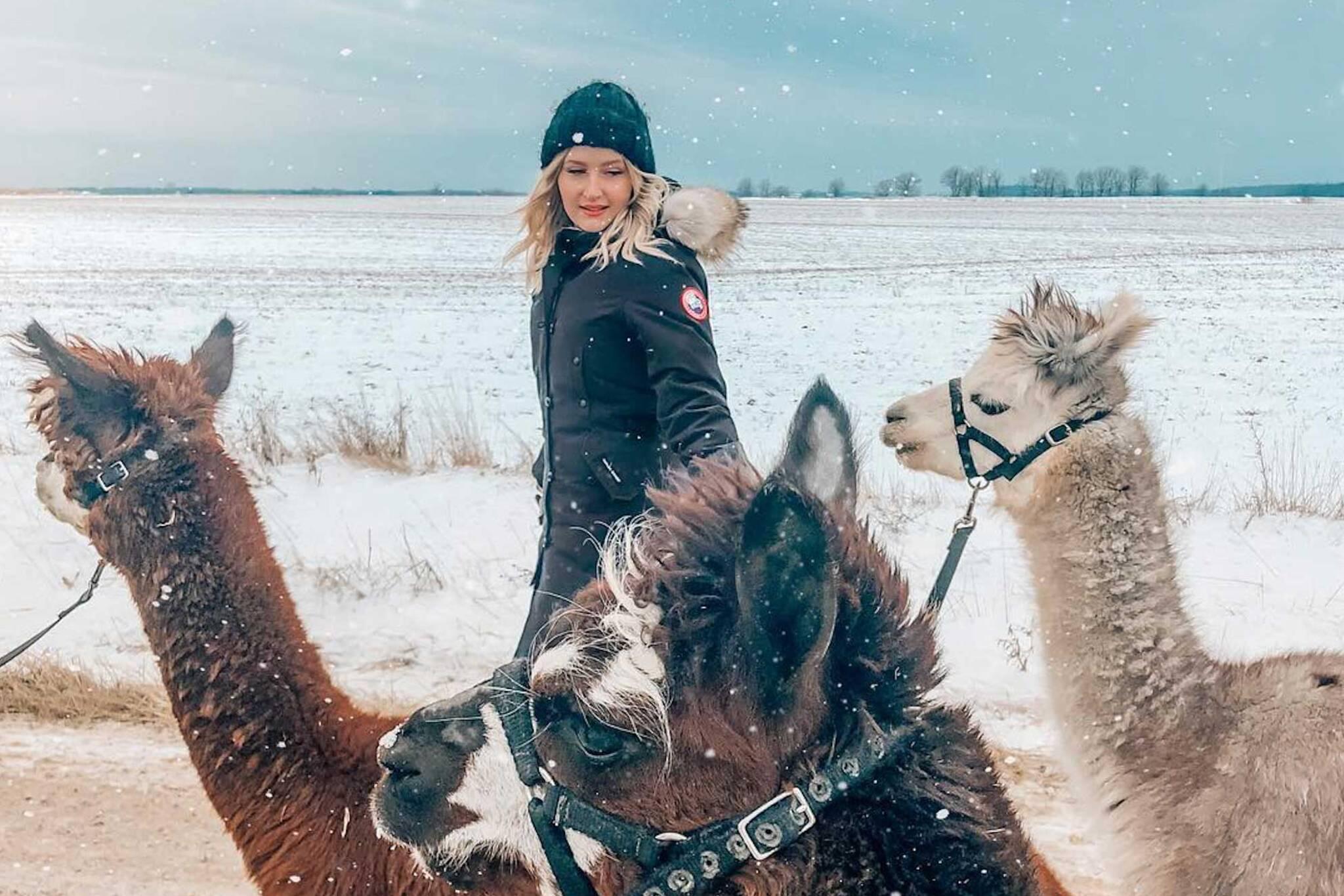 samys alpaca farm