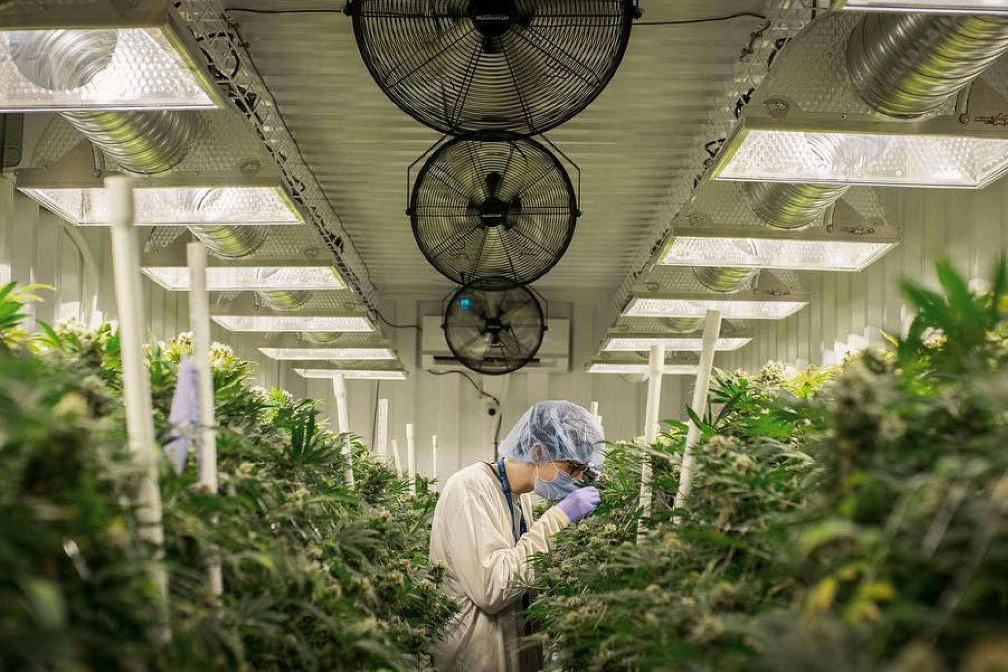 ontario cannabis store toronto