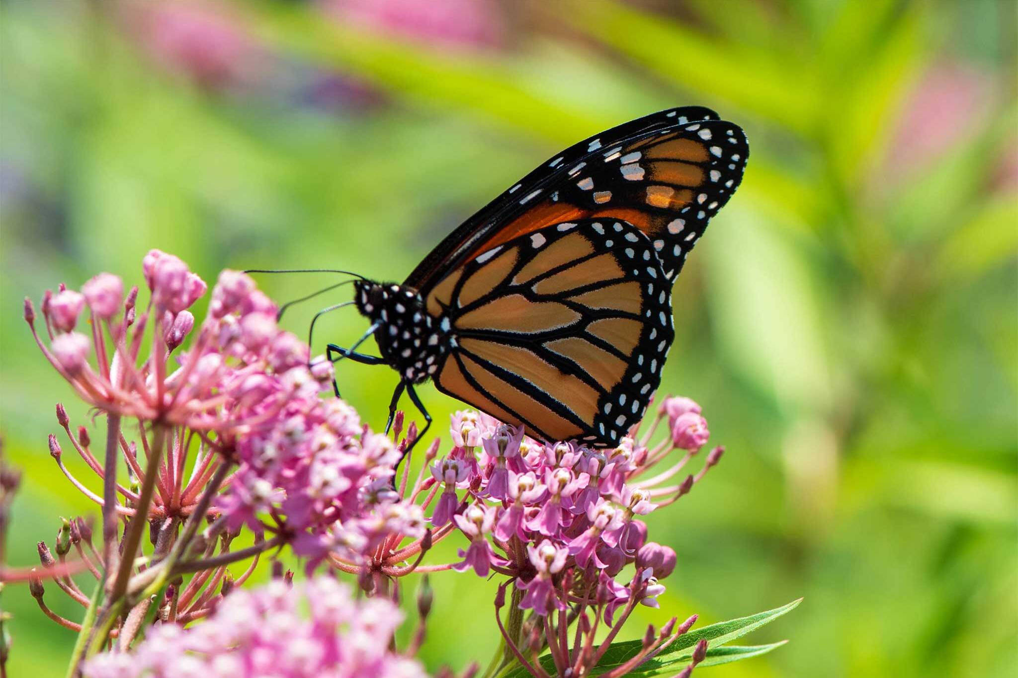 Toronto Has A Secret Outdoor Butterfly Garden And It S Free To Visit