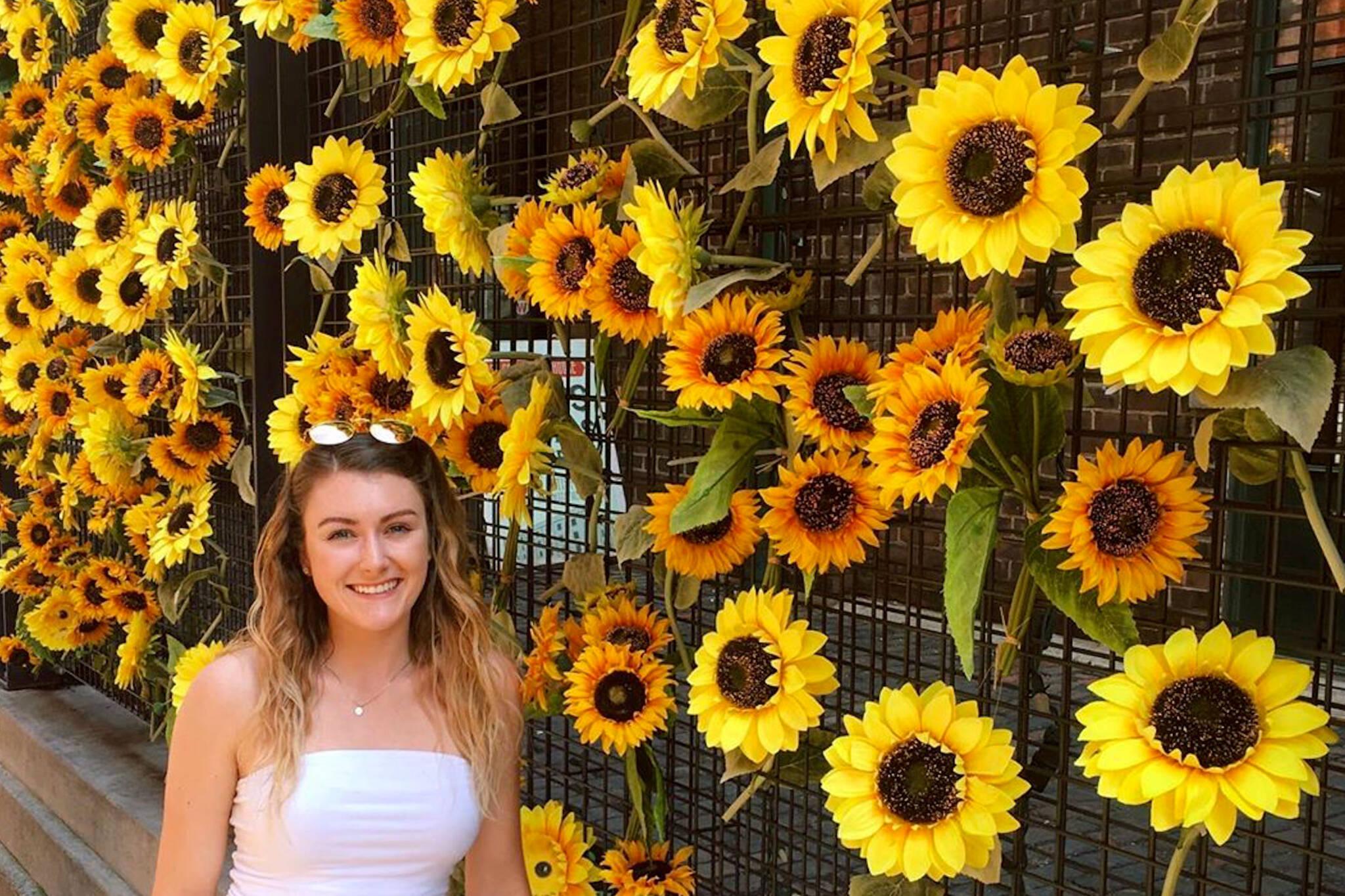 sunflowers toronto