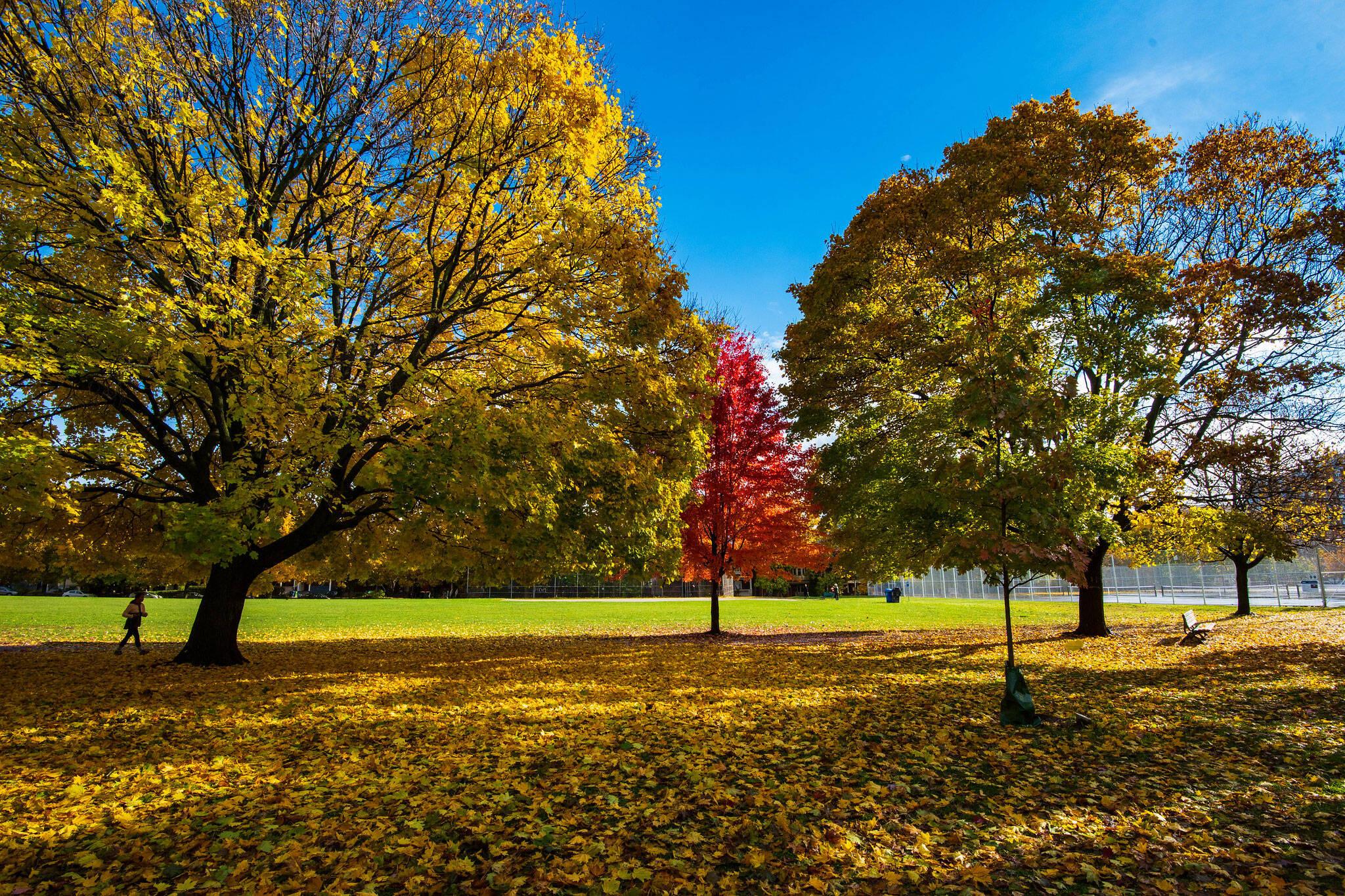 fall colours 2019