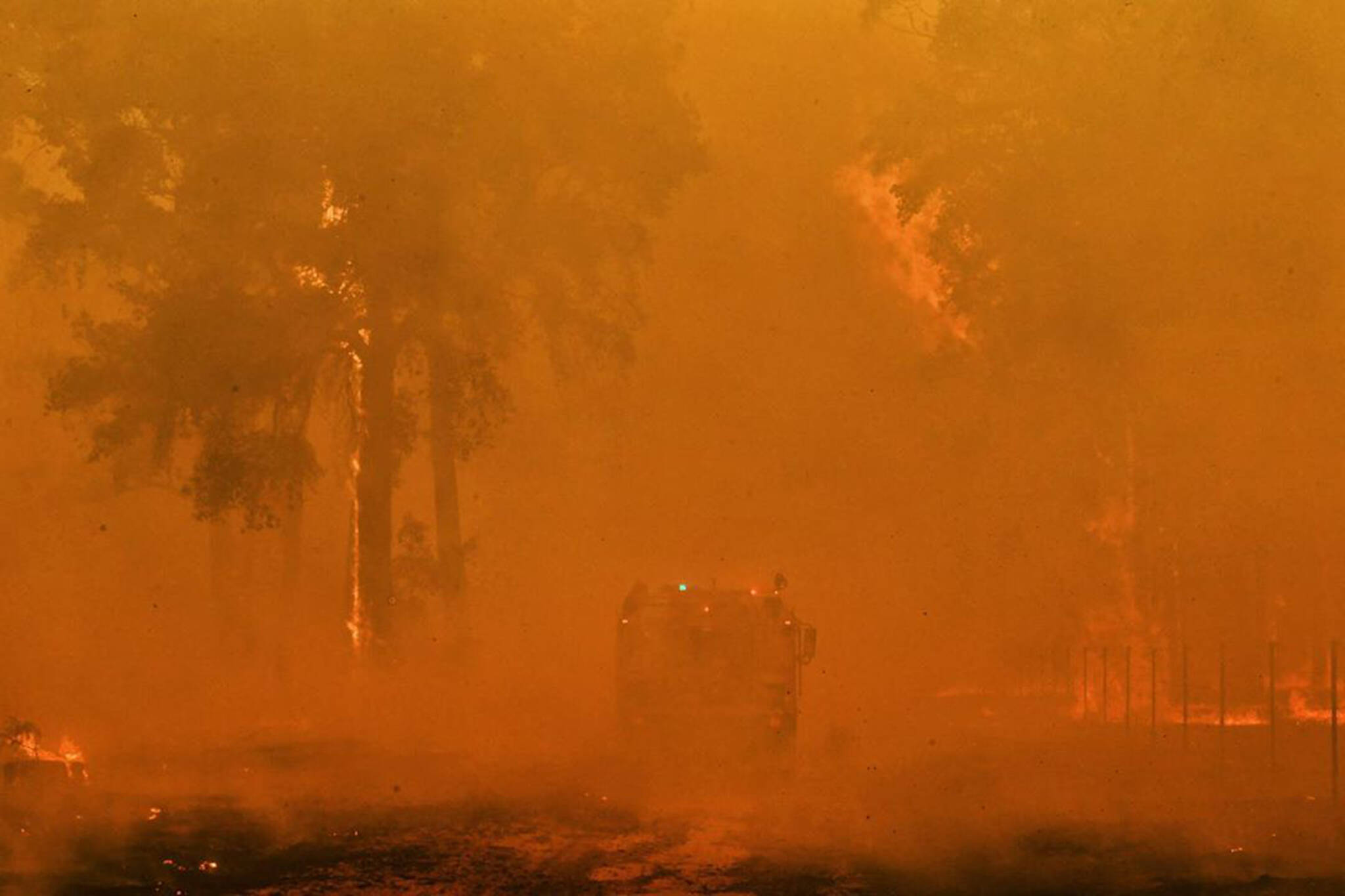 toronto businesses donate australia fires