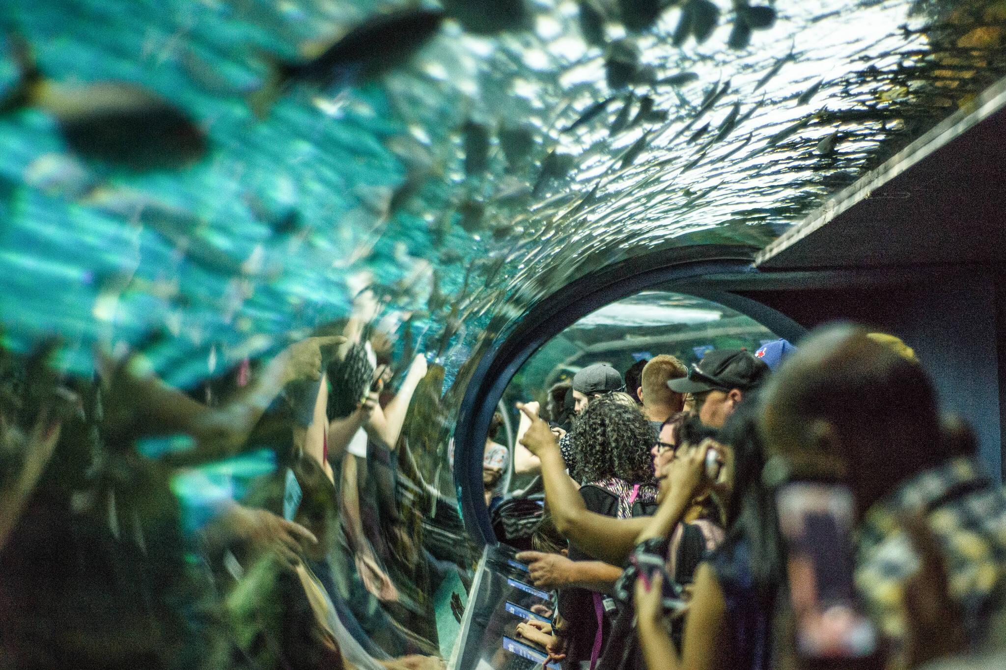 toronto tourism record