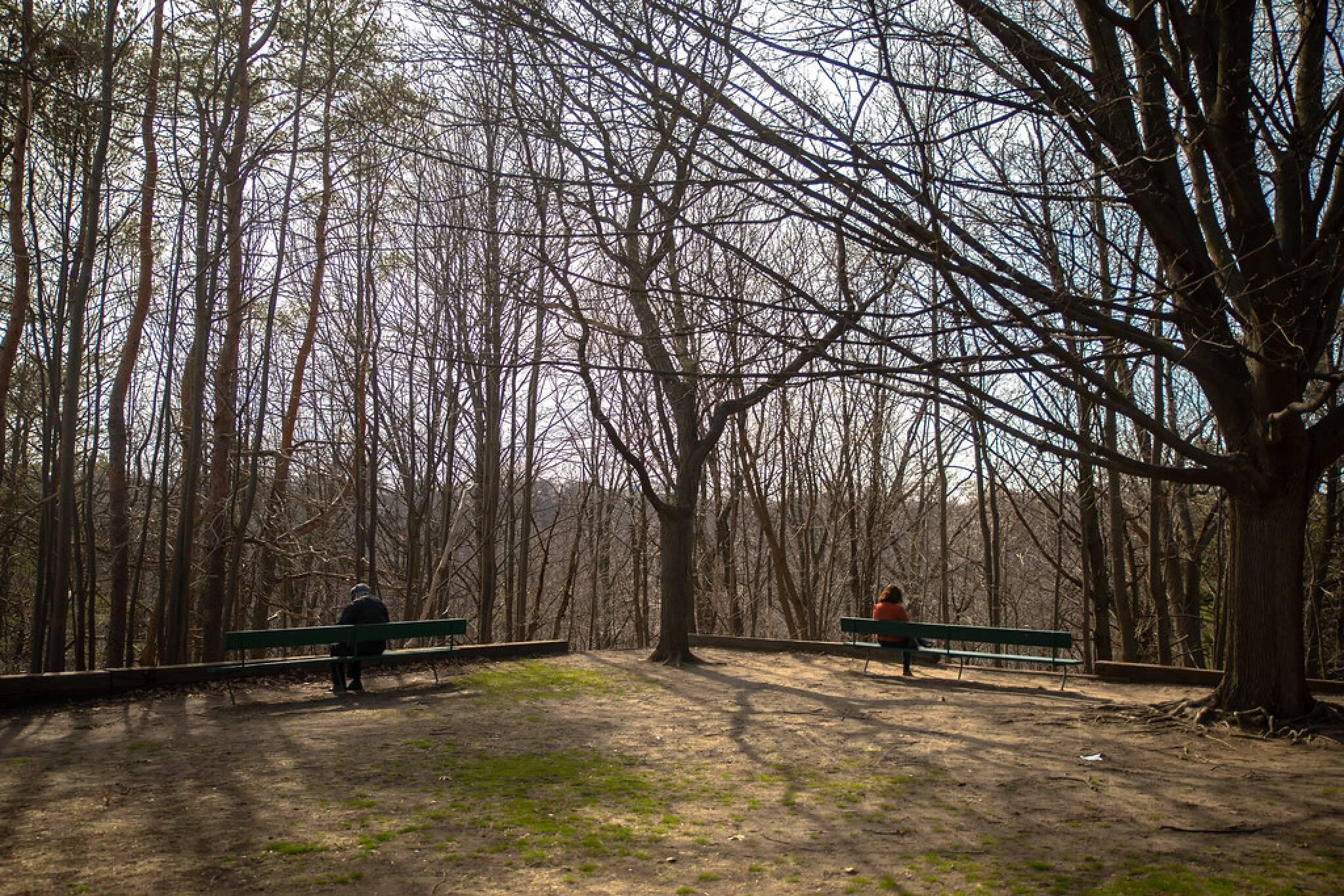 park bench fine toronto