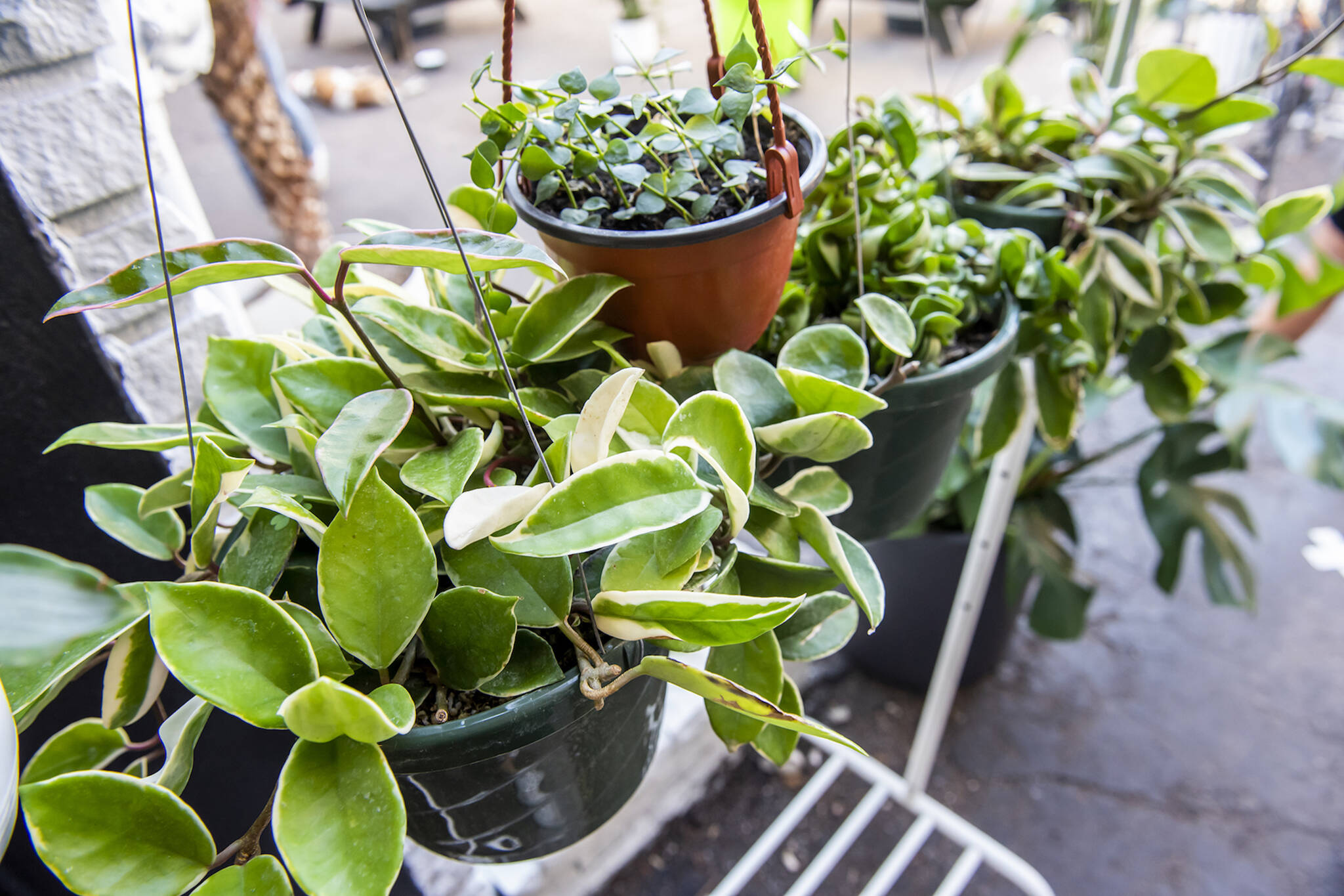 plants toronto