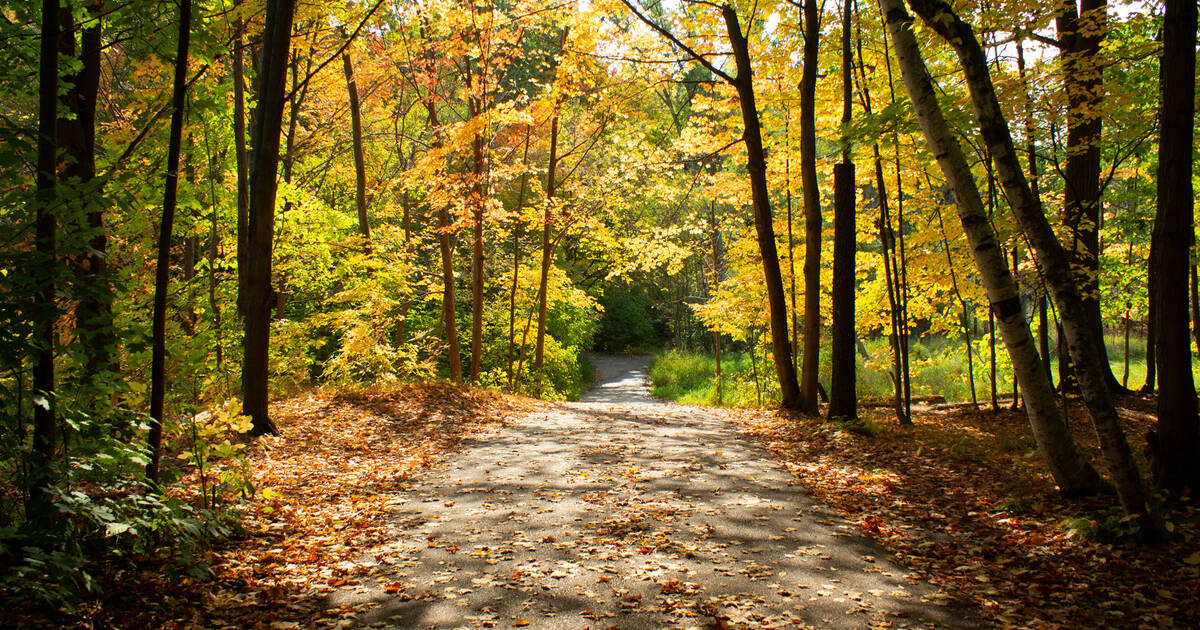 Lambton Woods is home to trails through Toronto's most beautiful forest