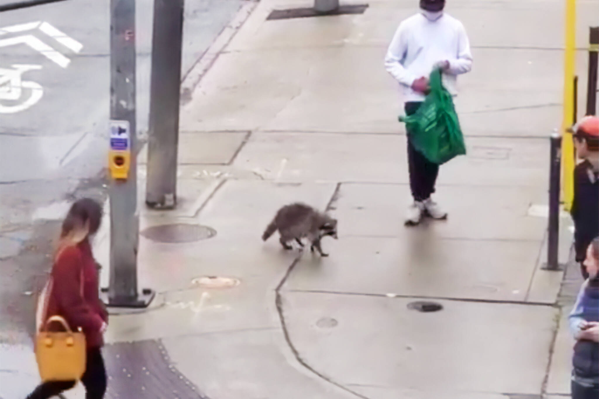 toronto raccoon rescue